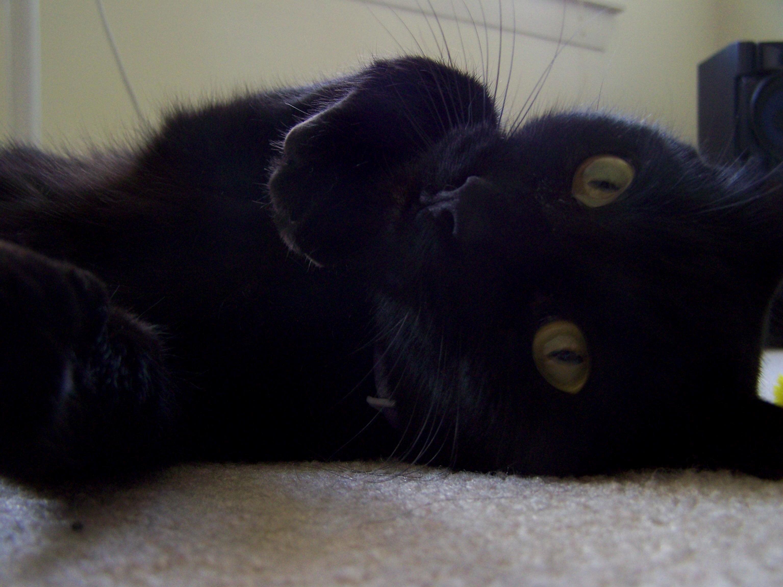 My lucky black cat brady