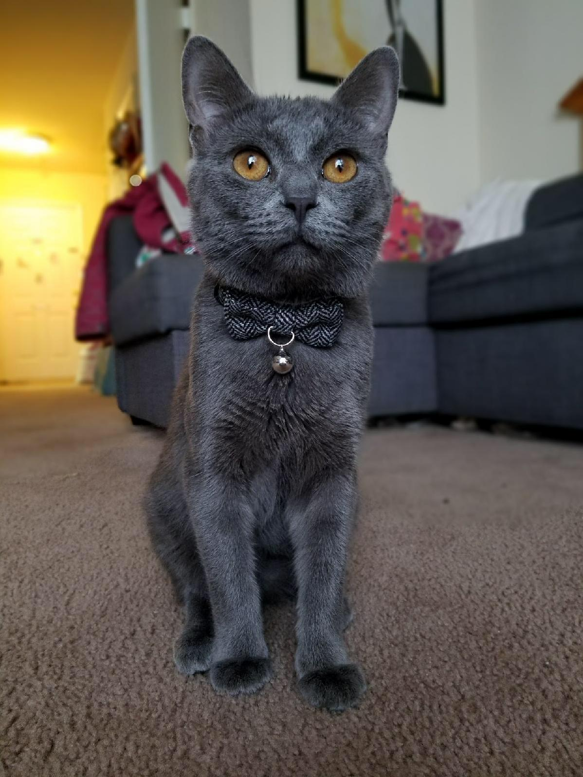 My sisters cat is a handsome dude.