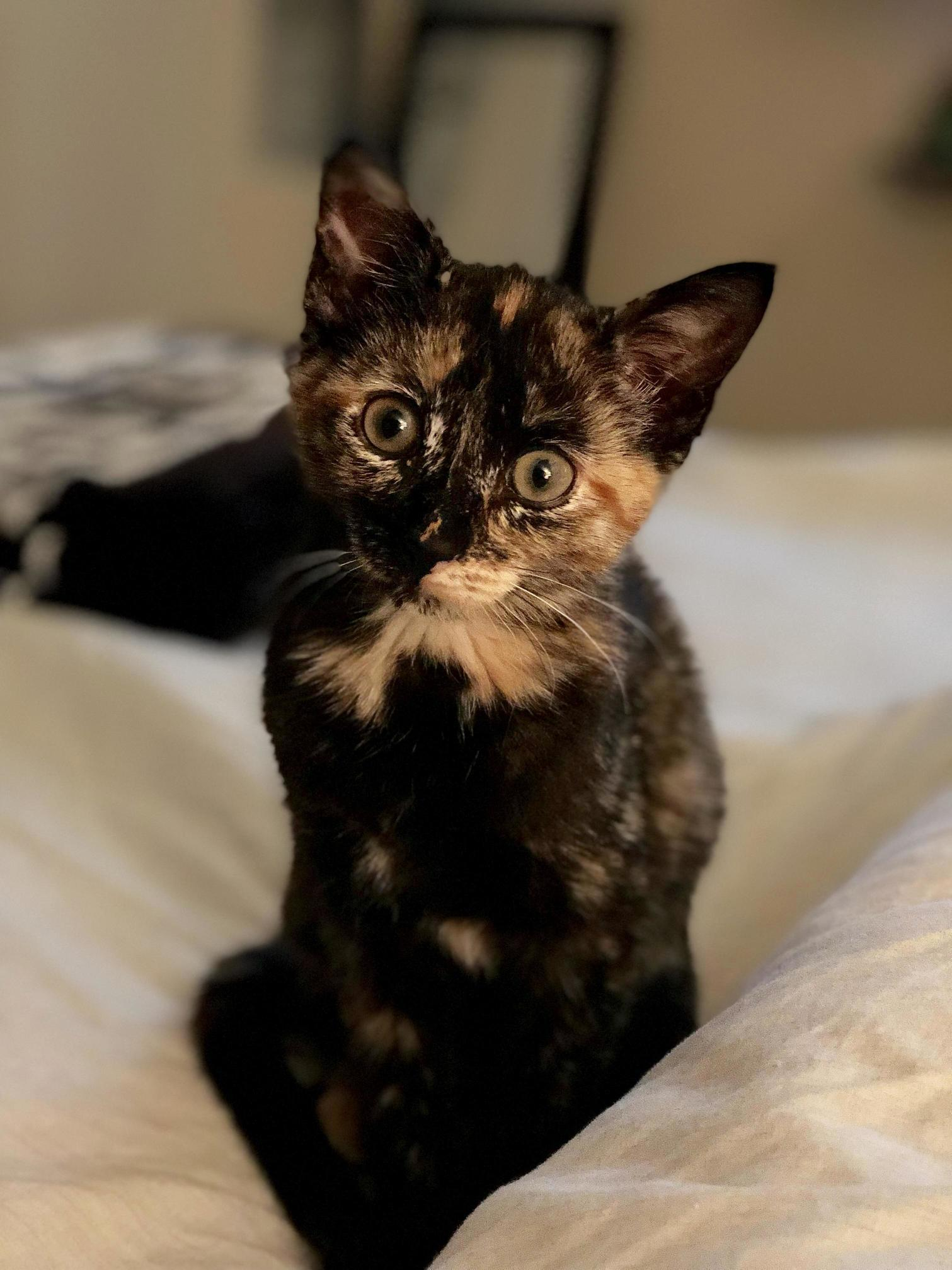 Rescued this little girl from the shelter