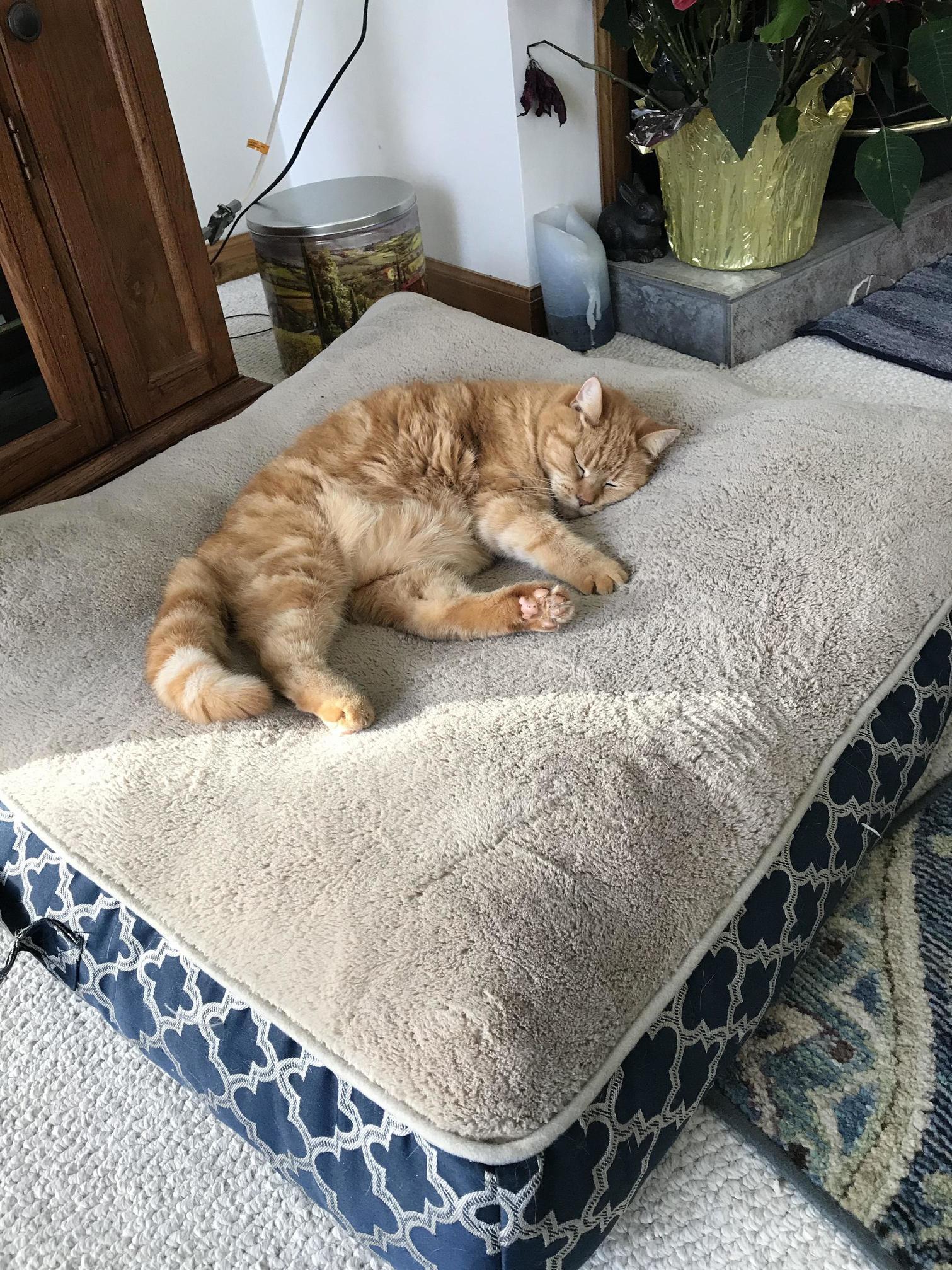 Sleeping on the dog bed lol