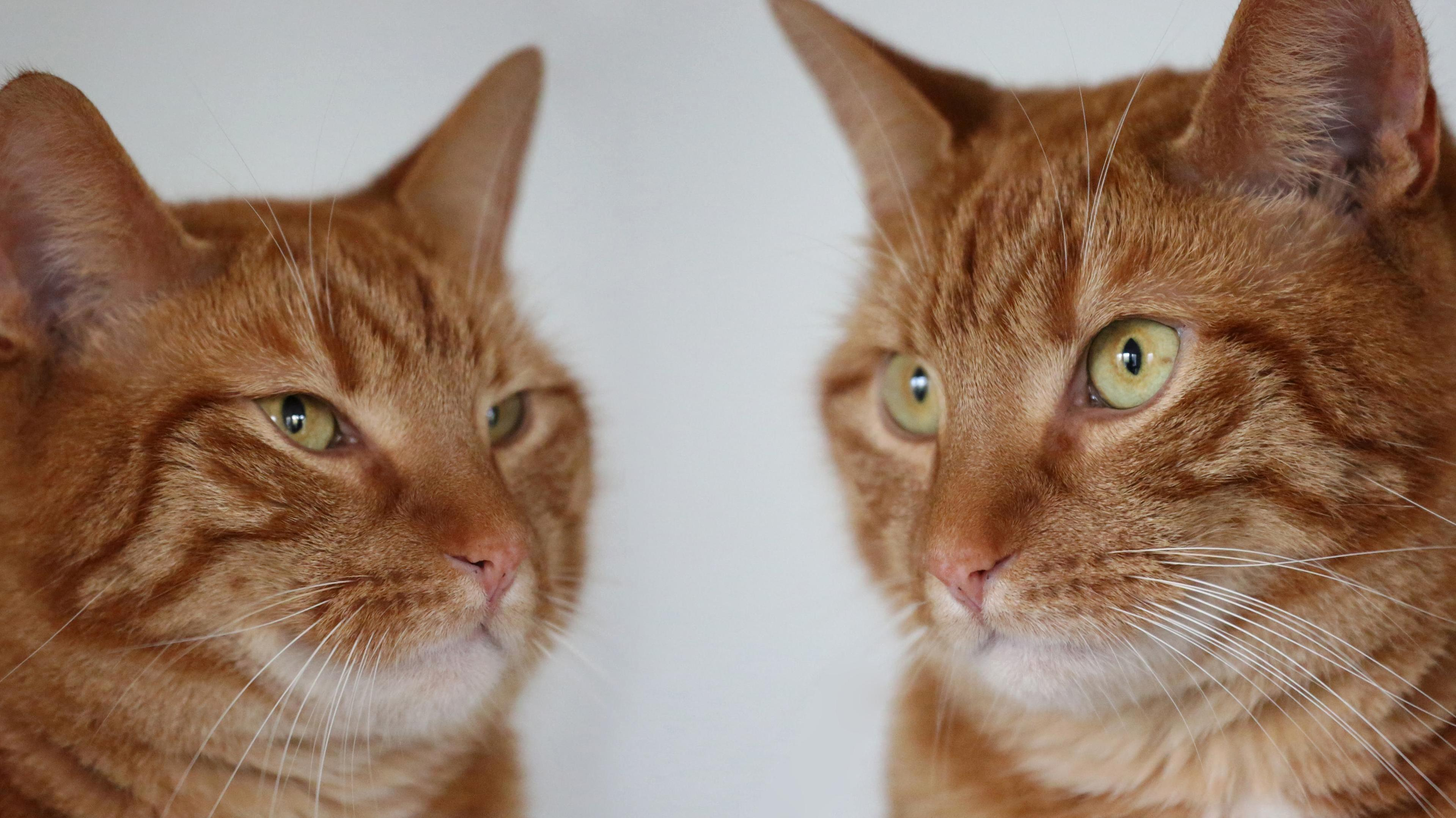 Took some pictures of my cat, who i think looks gorgeous, despite originally having been found in a stray nest.