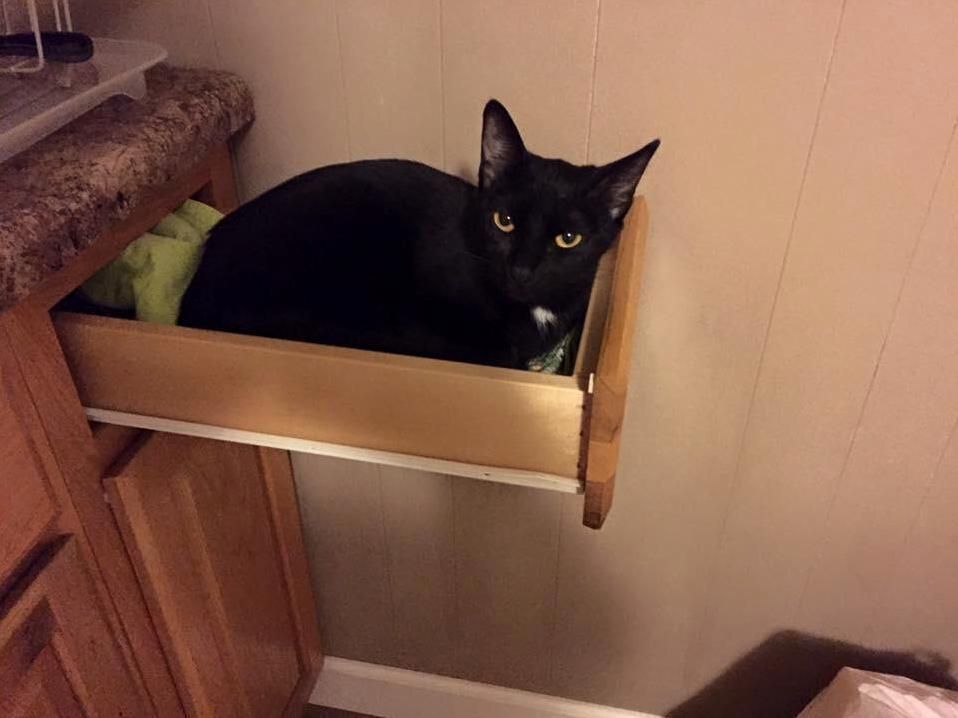 When you leave the drawer open and it becomes a bed