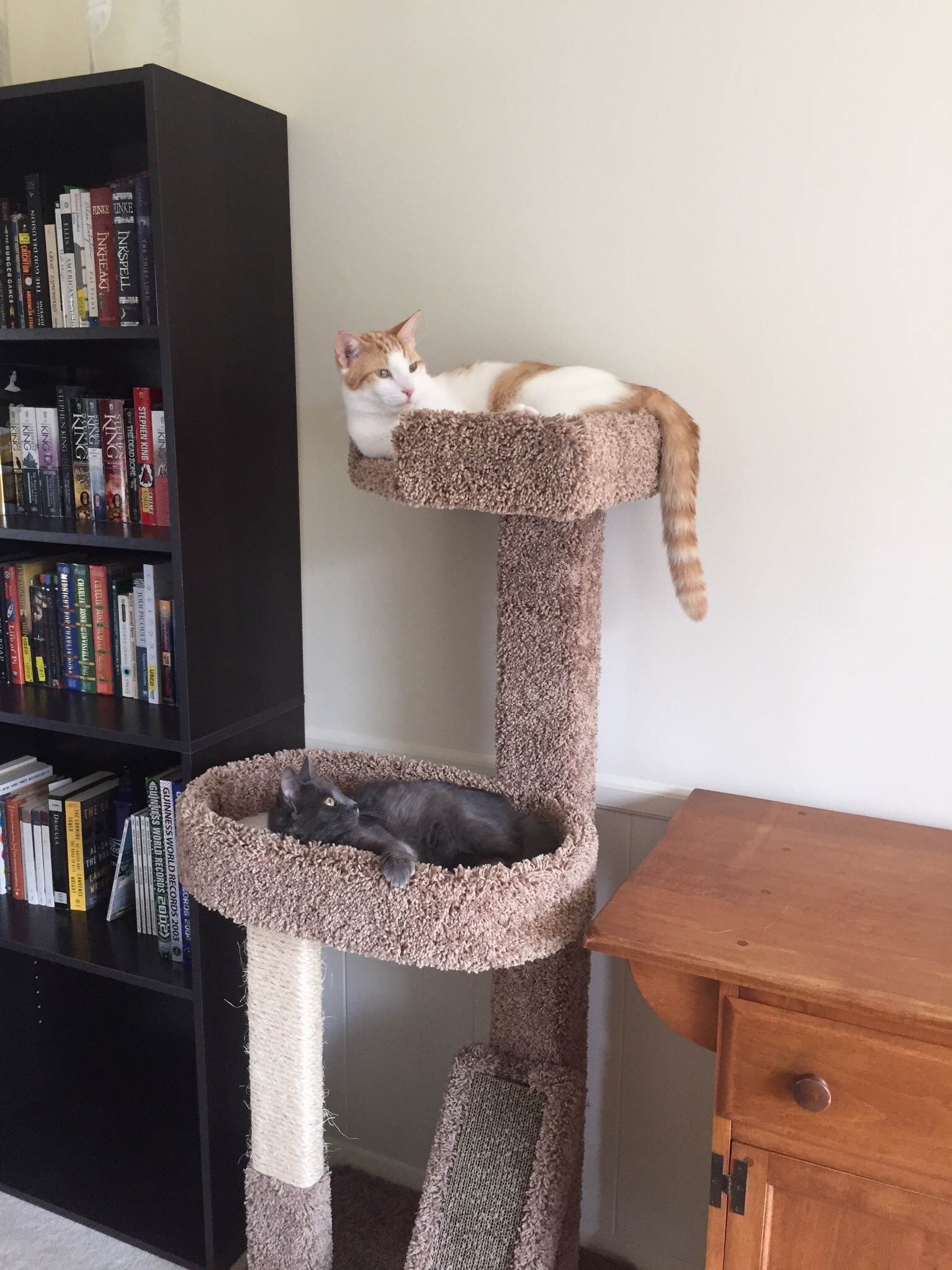 A new cat tower brings them together.