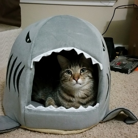 A shark ate my cat