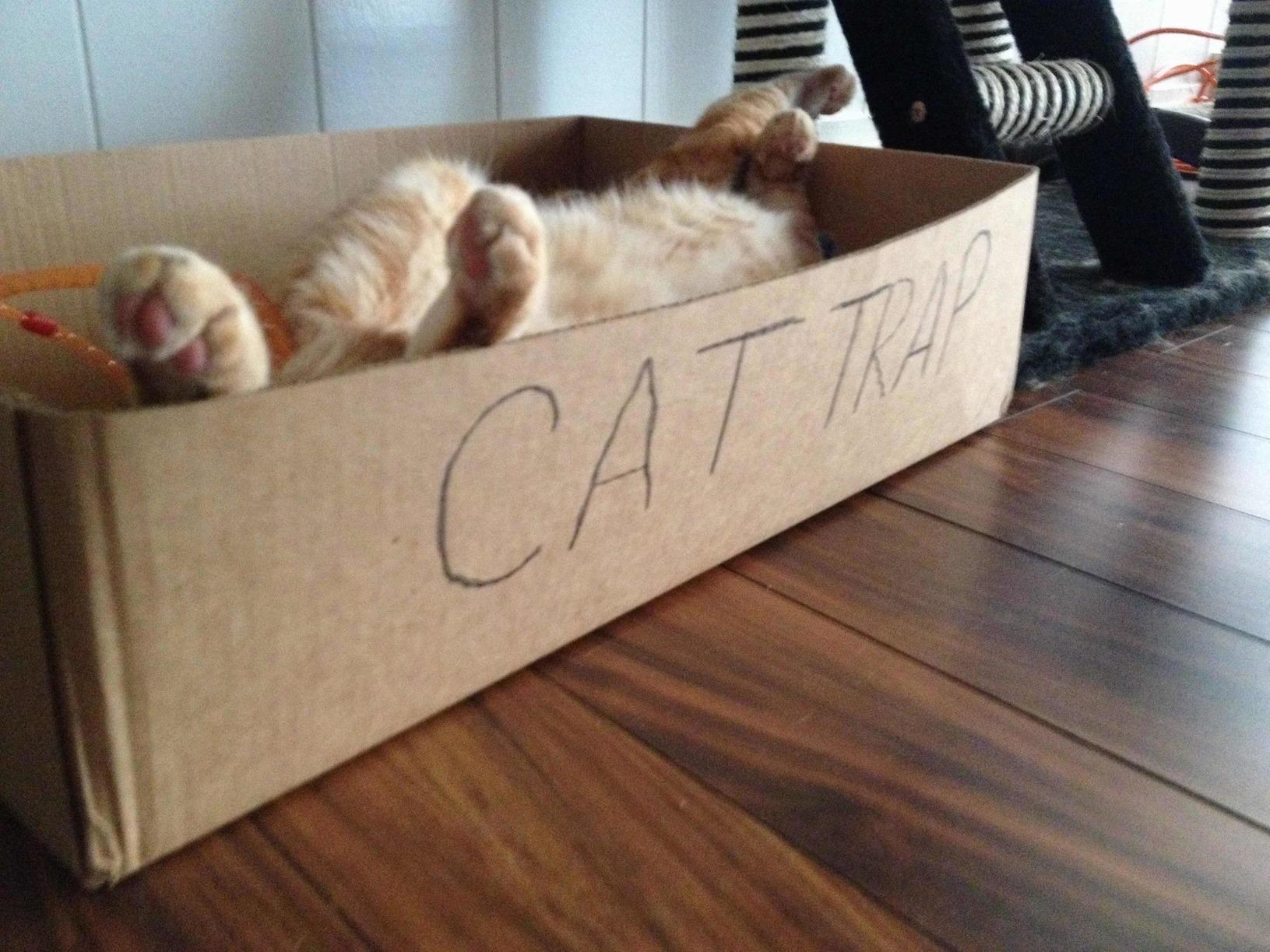 Cat trap full