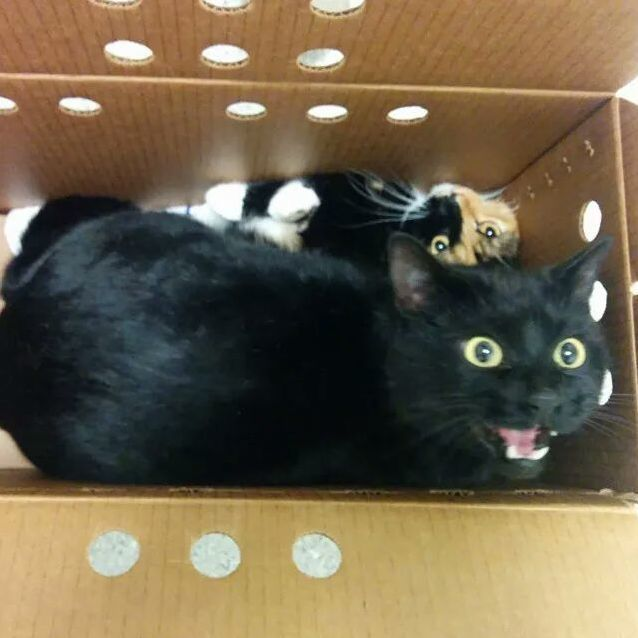 Cats had to go to the vet today…