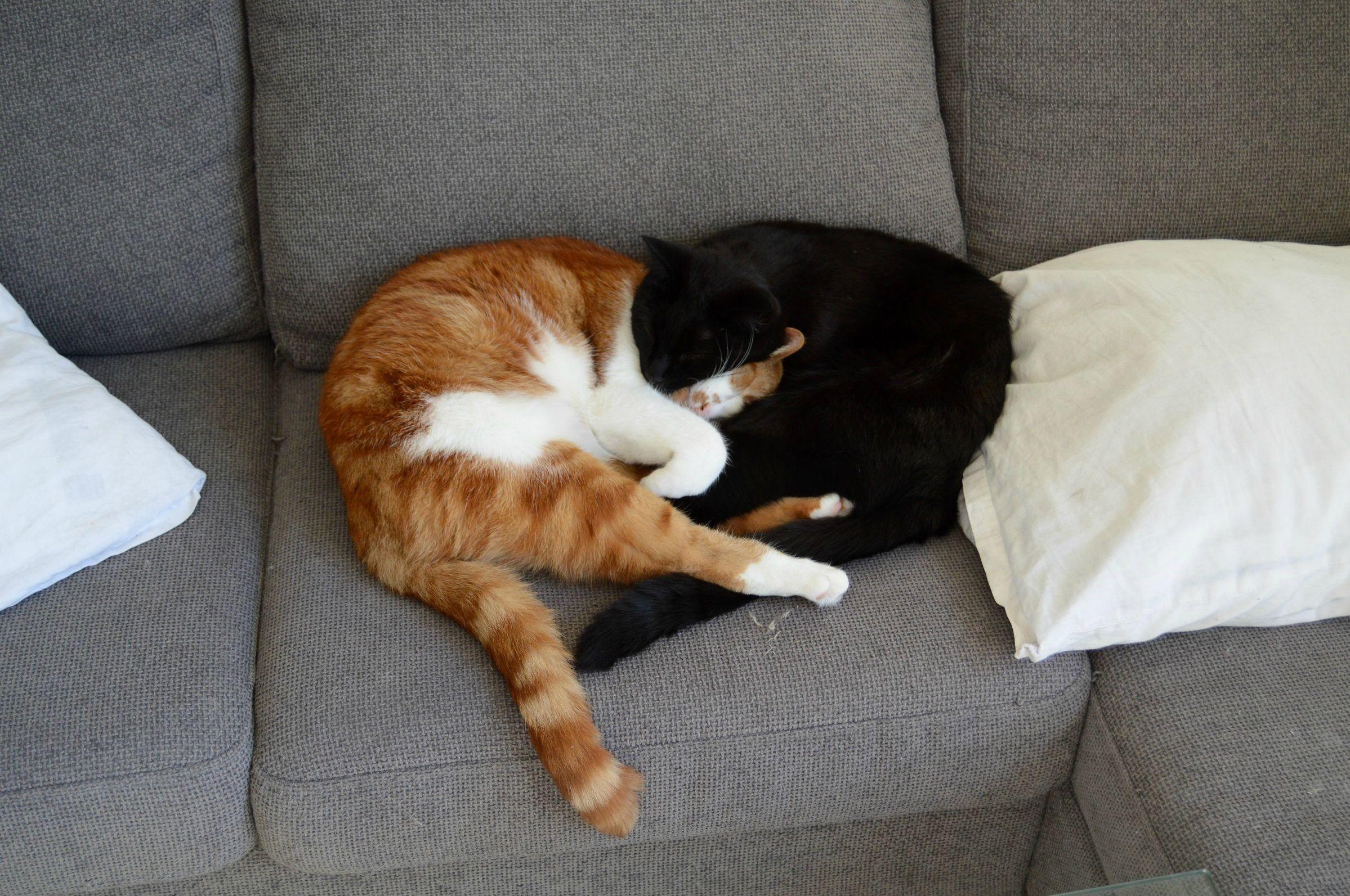 Comfy cat cuddles