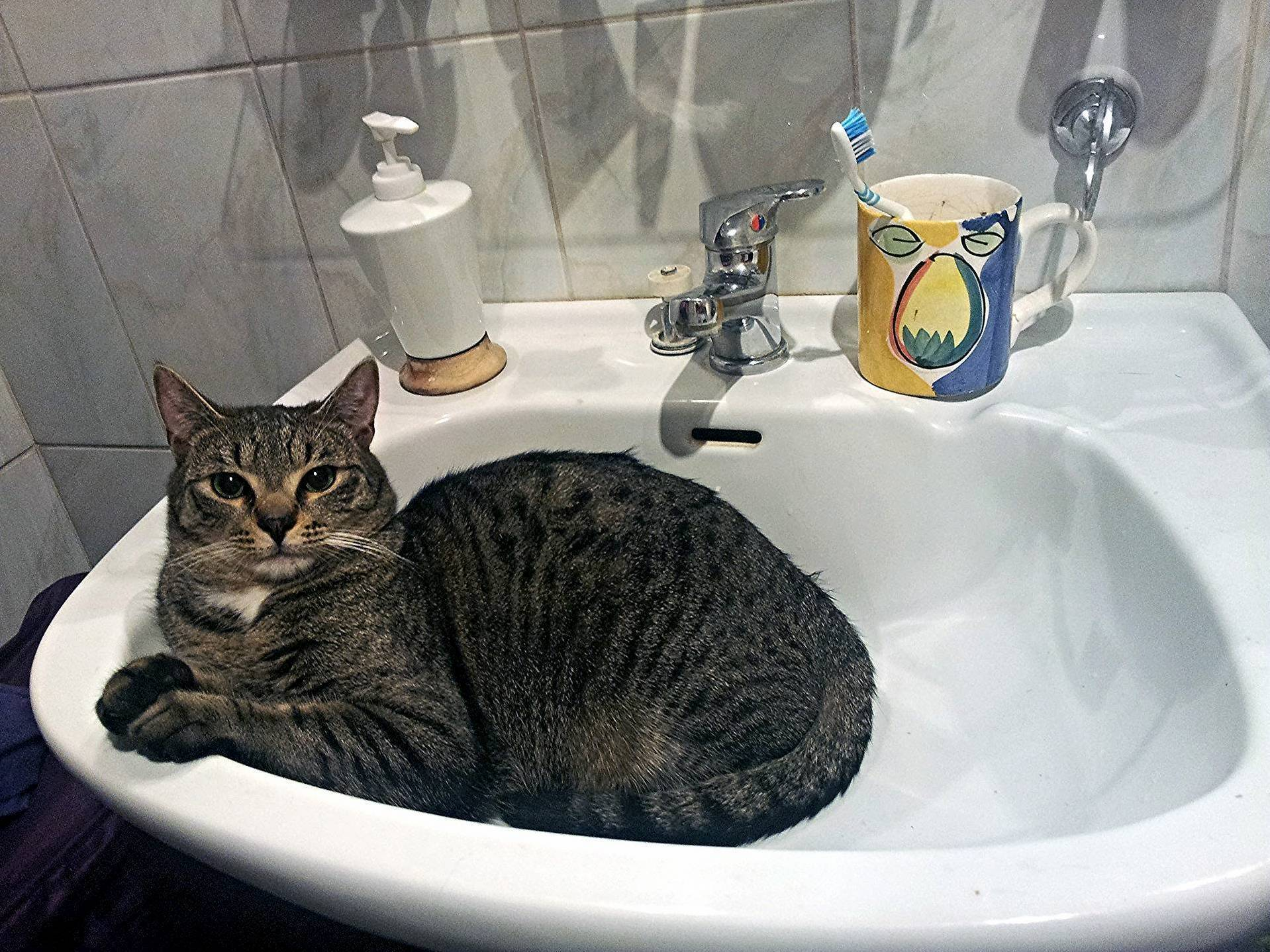 Figaro in a sink