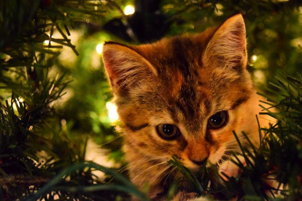Heard some suspicious rustling in the christmas tree