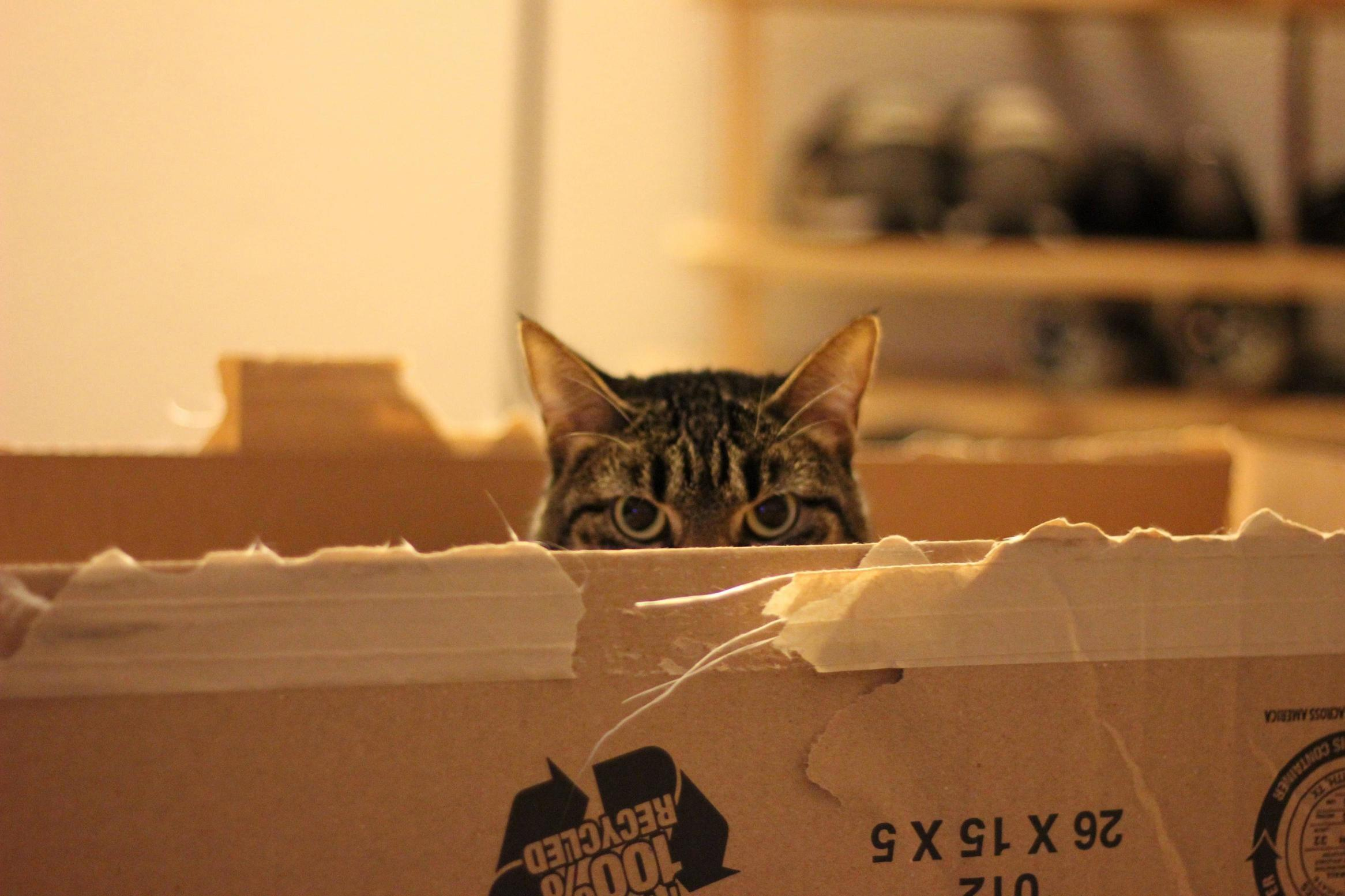 Leave the box and go….
