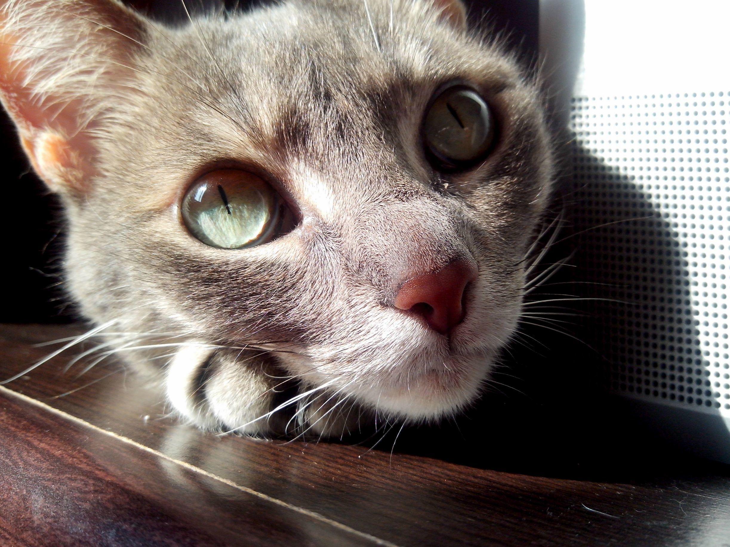 Lucas seafloor eyes