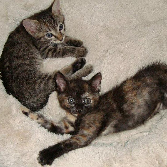 My cats arnold willis when they were kittens.