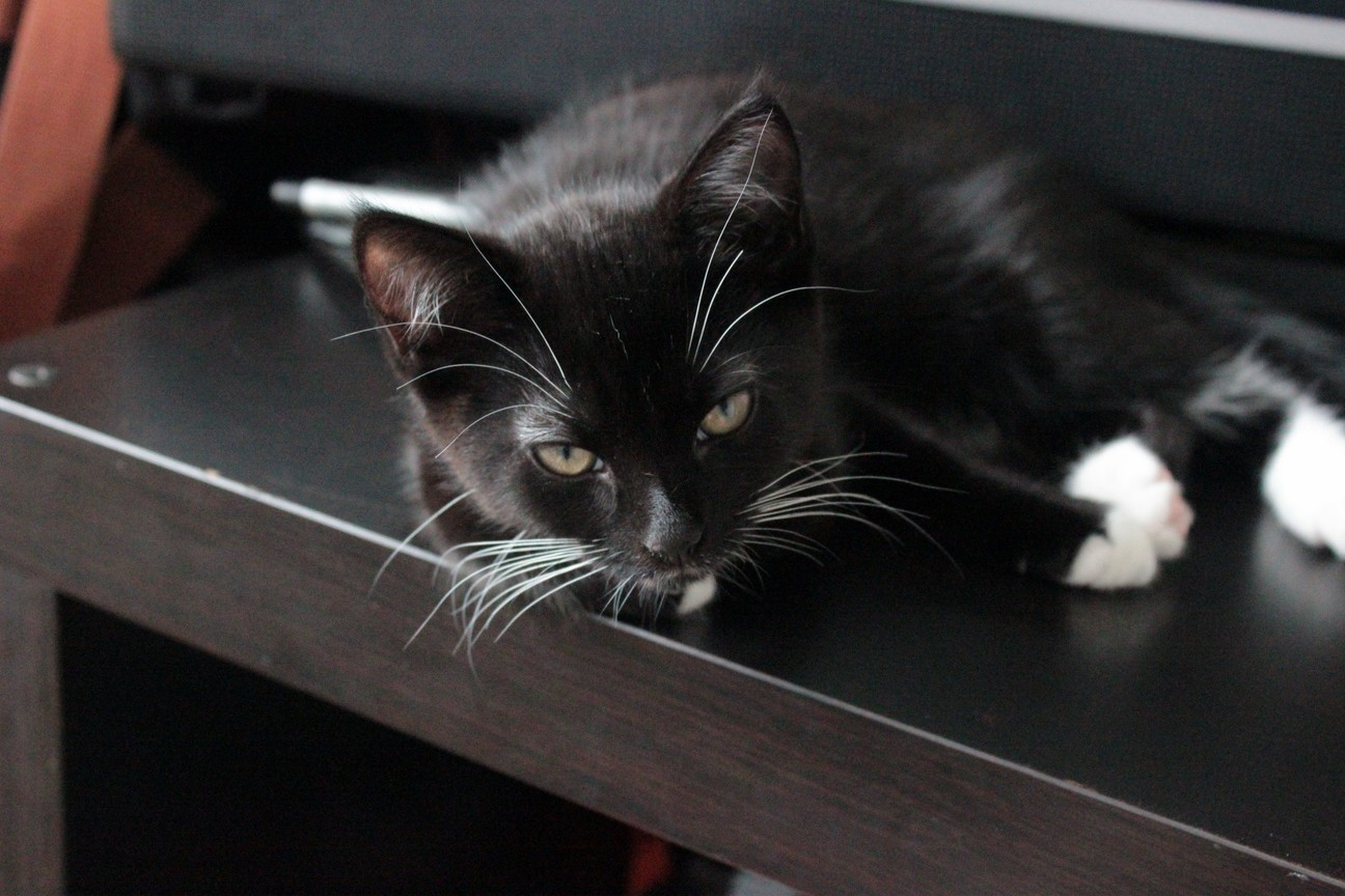 My kitten echo awoken from sleeping on my desk