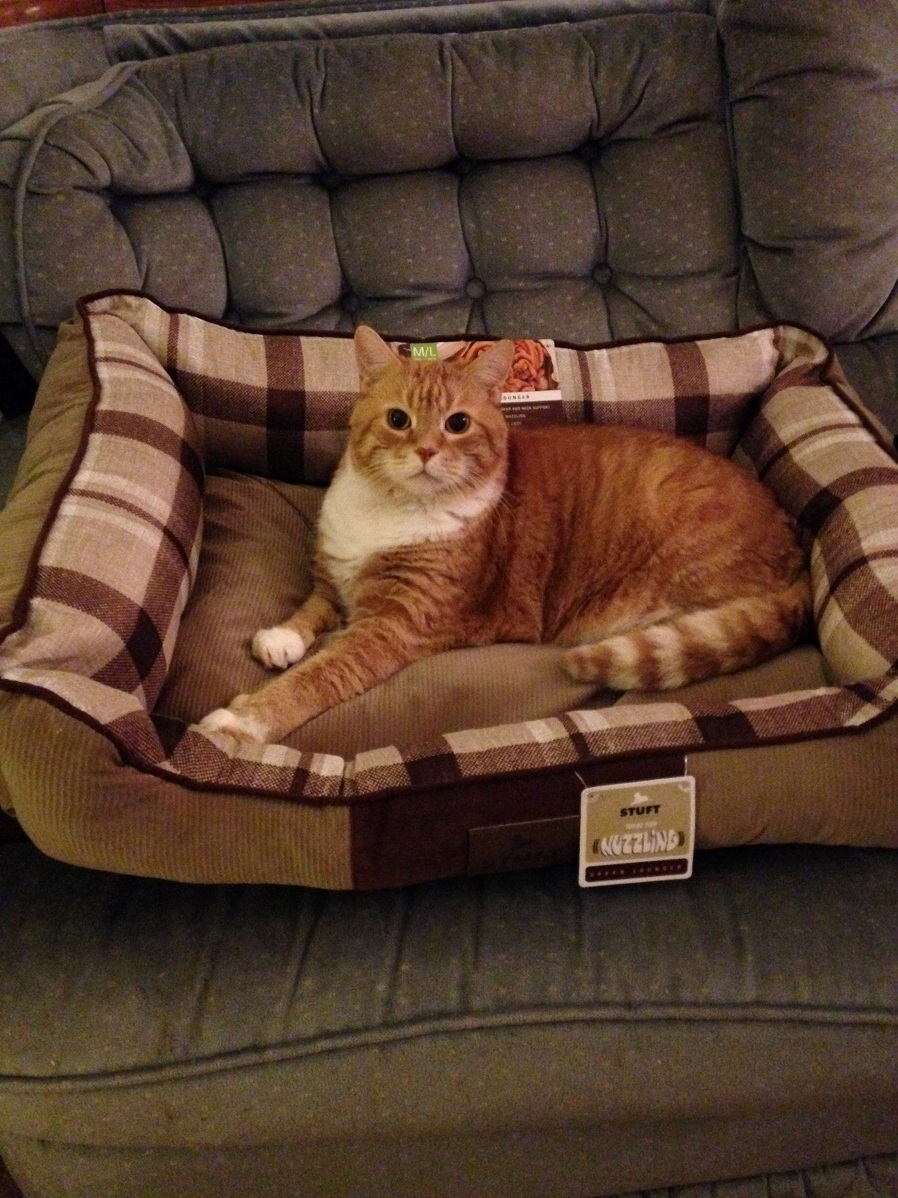 My moms cat thomas enjoy the bed she bought for my dog.