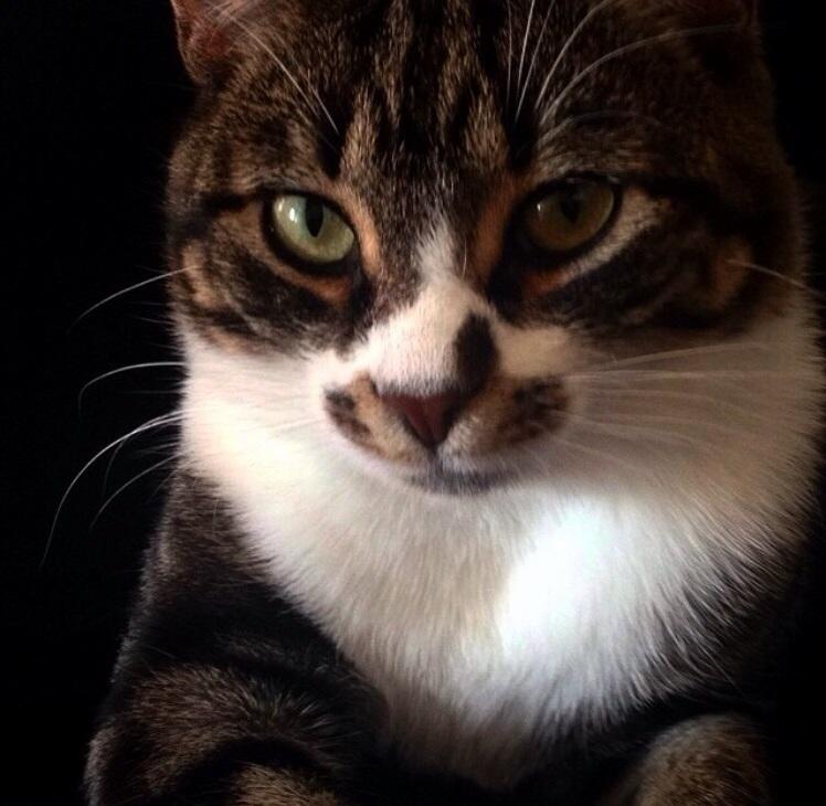 My regal cat