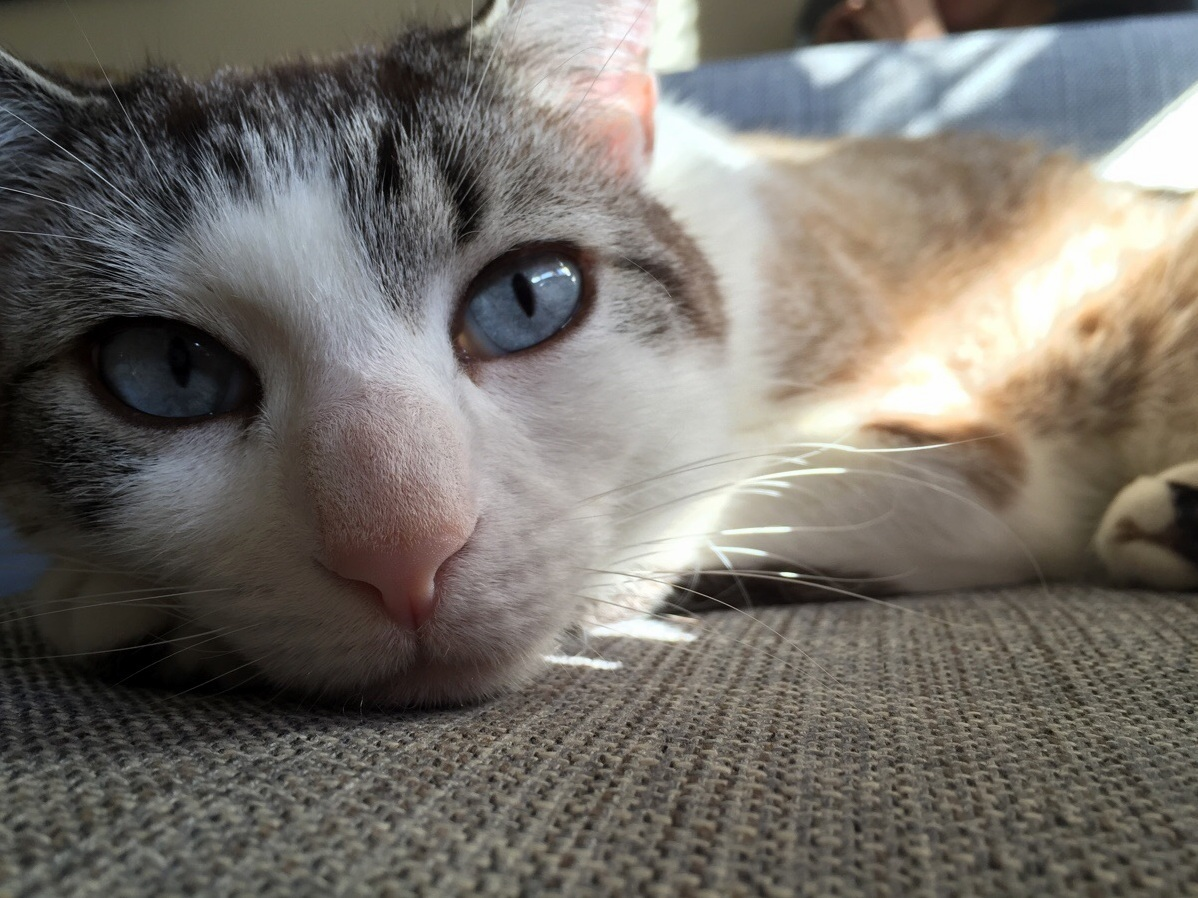 Stan is flashing me his baby blues in the saturday sun.