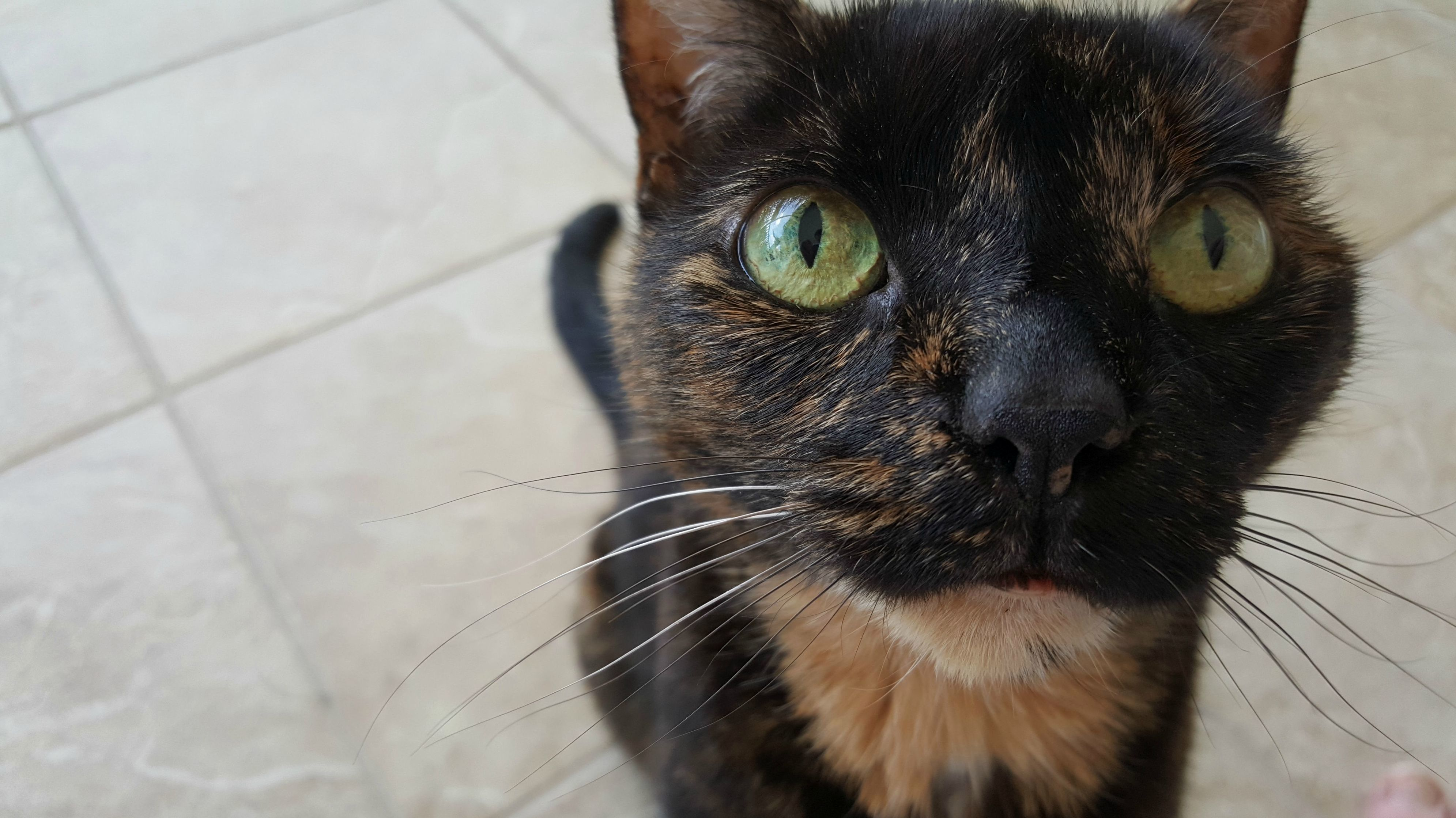 This is mocha. she is old and sick. but shes still a pretty girl.