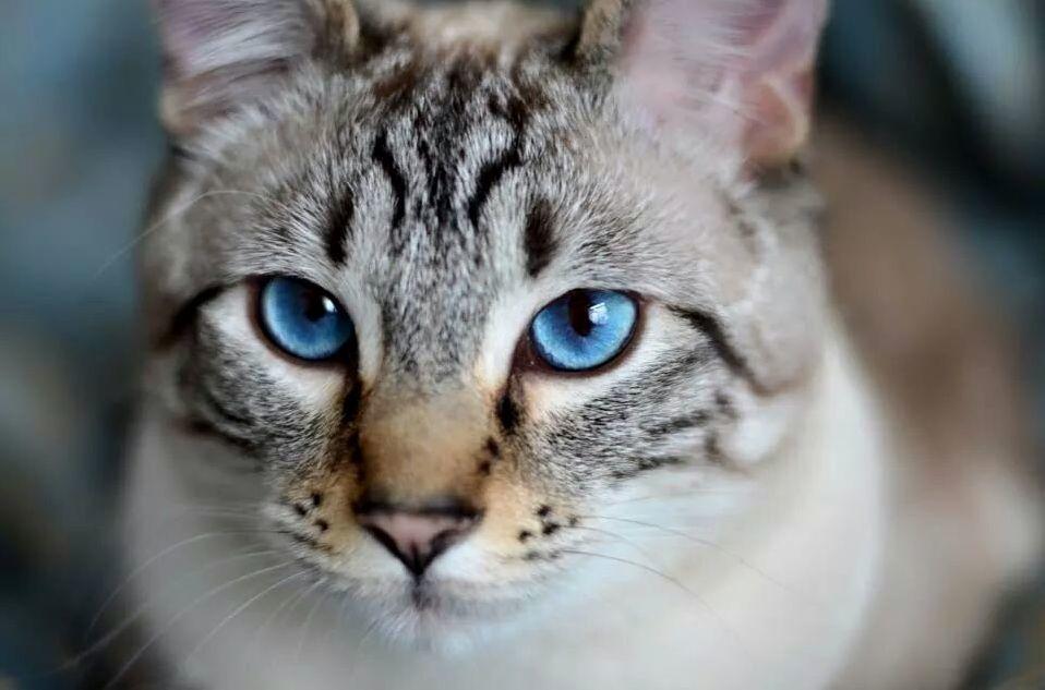 Those blue eyes though.