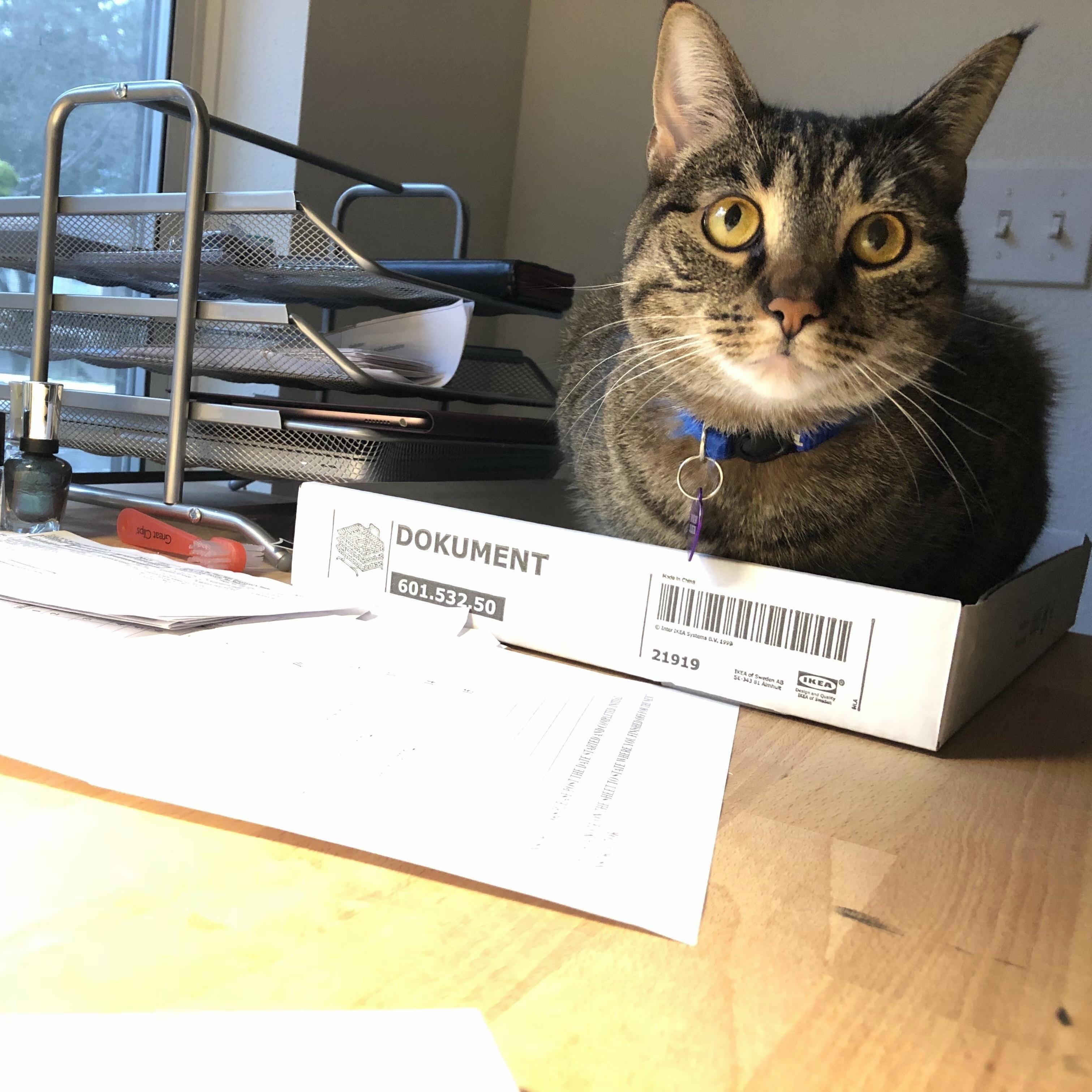 Apparently ikeas desk organizers come with a bonus tray for your cat