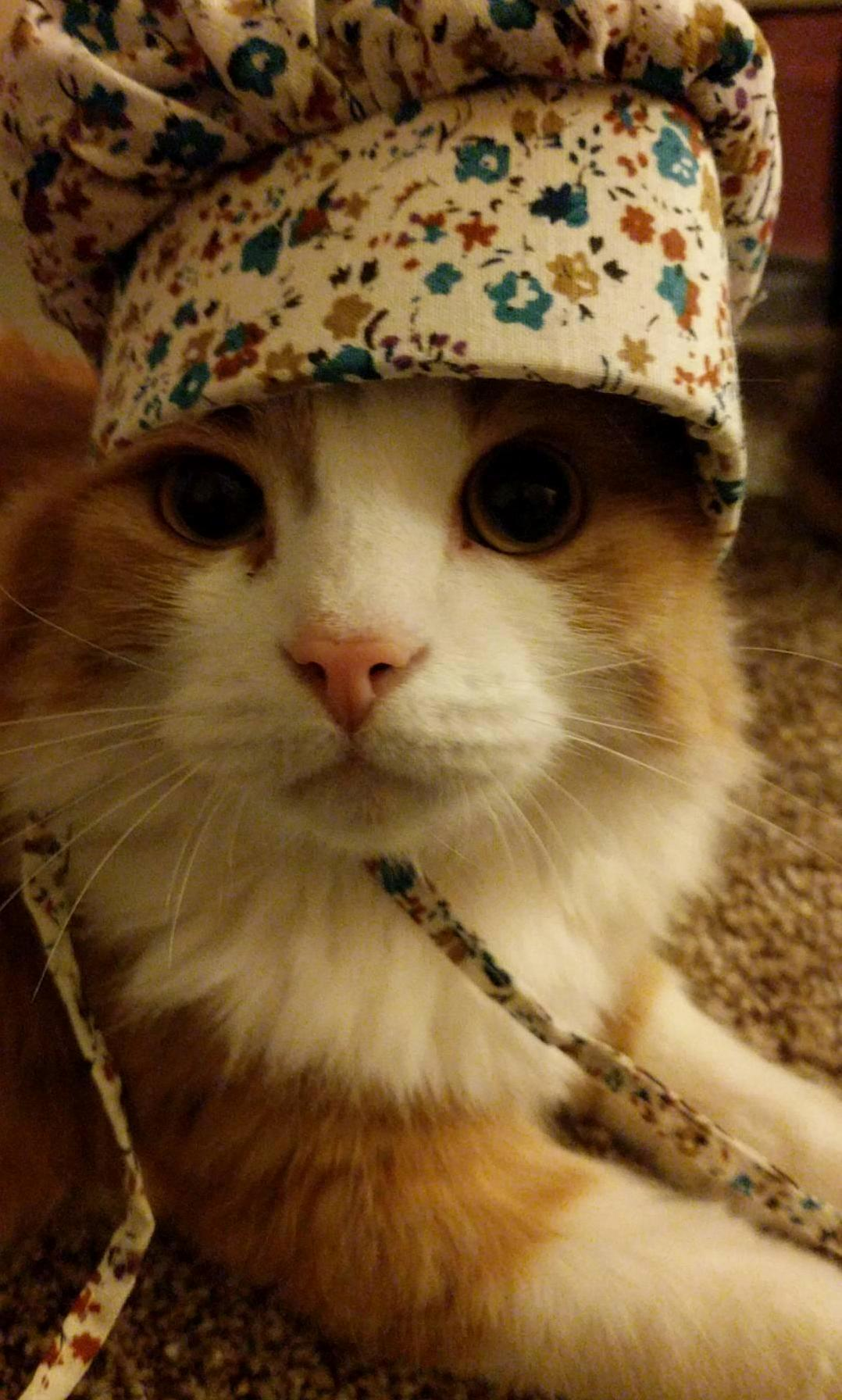 Bashi in a bonnet.