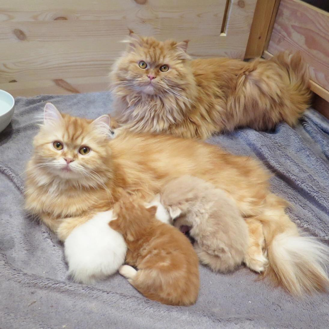 Family portrait, seconds before the father knocked over the water bowl and drenched his family.