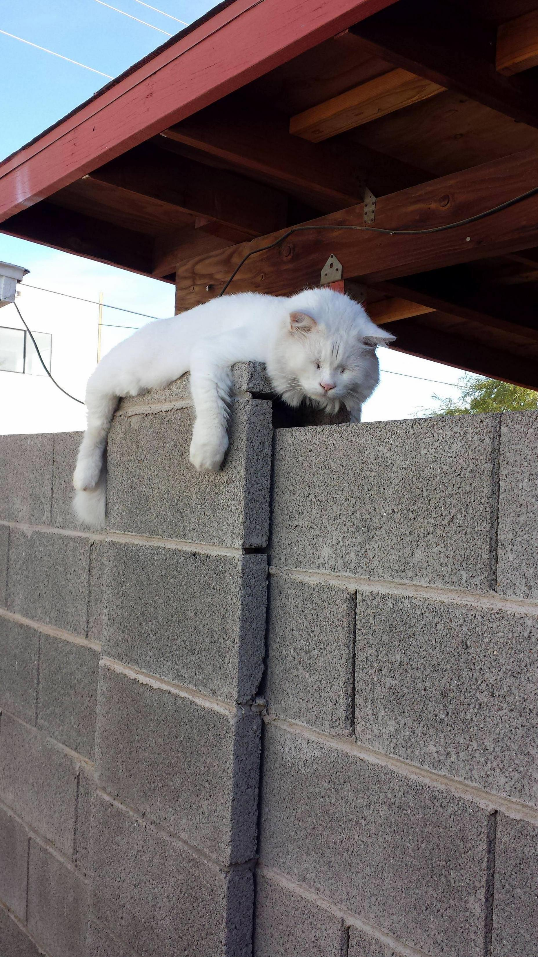 Found my kitty spilled on the wall