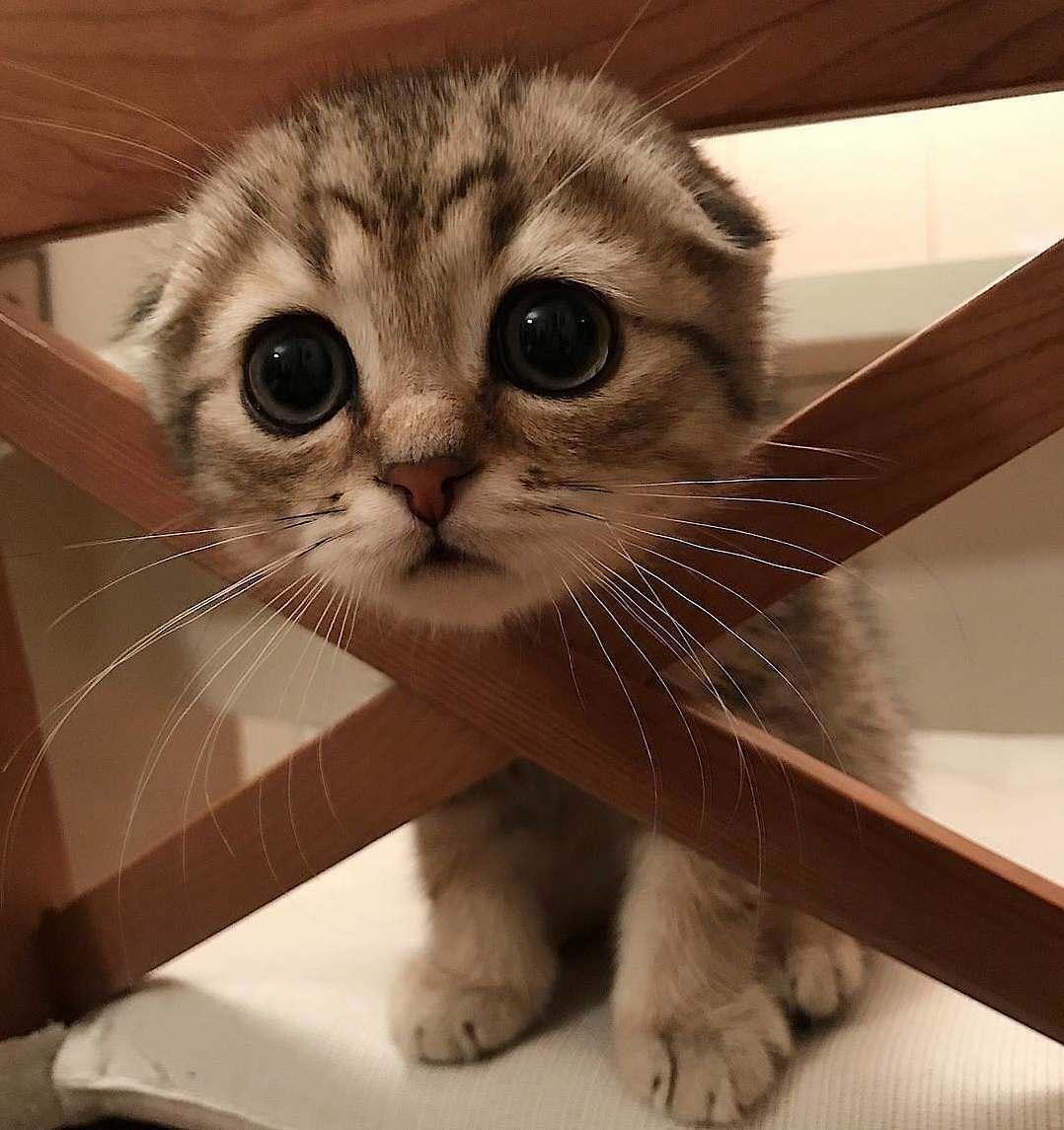 Help me! im stuck