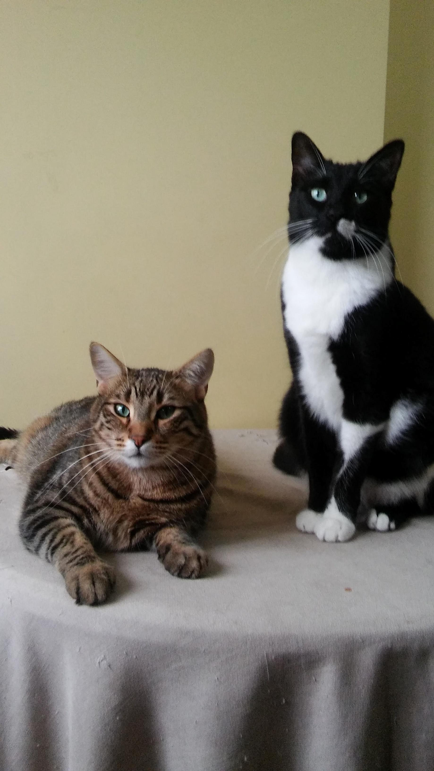 Leo (tuxedo) and nairo, two brothers
