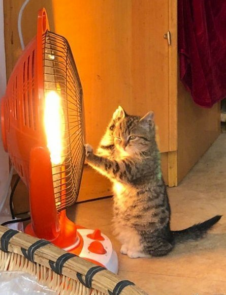 Love this adorable scene of a kitty warming its paws by a heater