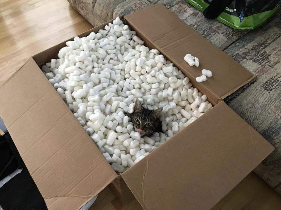 My brothers cat loves packing peanuts more than anything. once in awhile, she gets a playtime treat