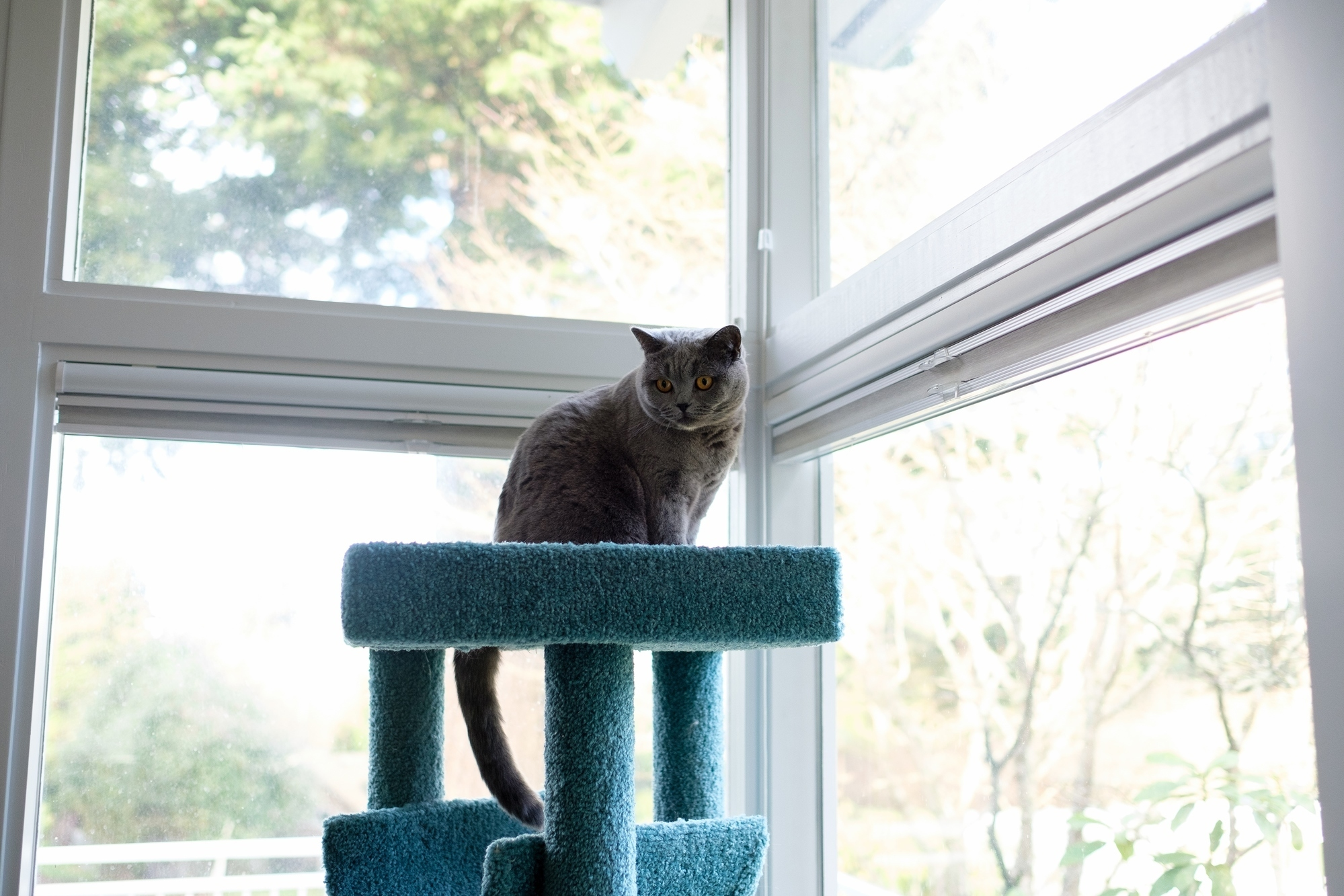 Stella on top of her cat tree