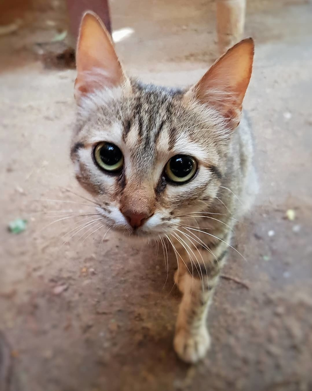 A beautiful feline who came to say hello whilst i was working in egypt earlier this year
