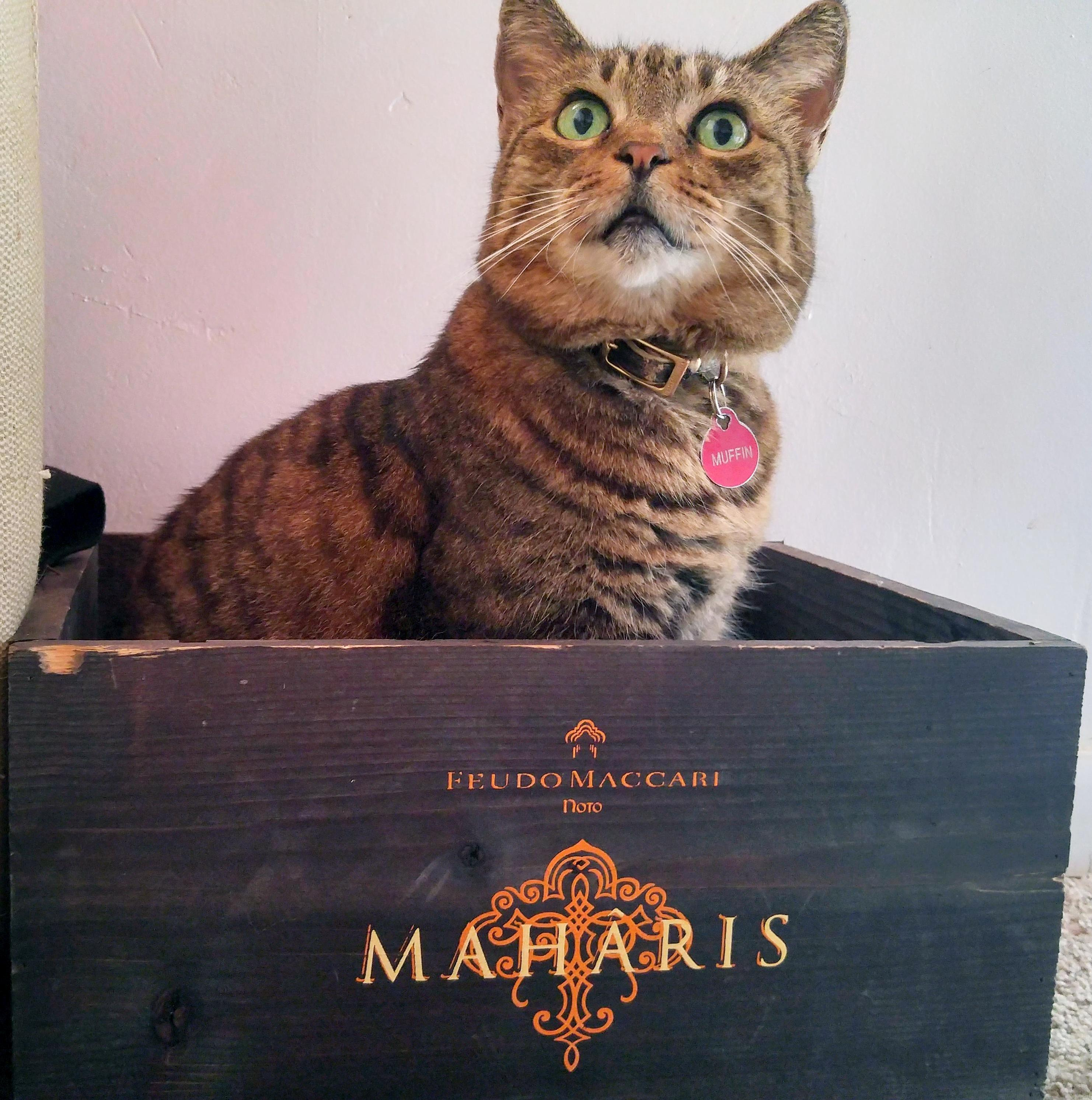 A rare maharis muffin, still in the box