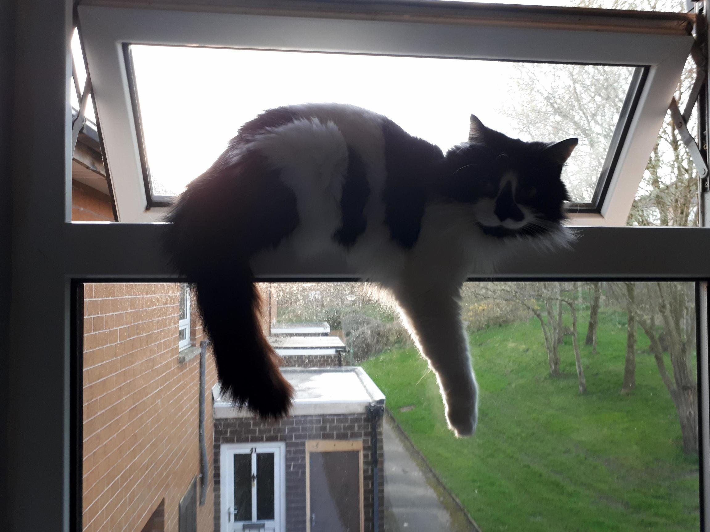 Casually hanging out if a second story window