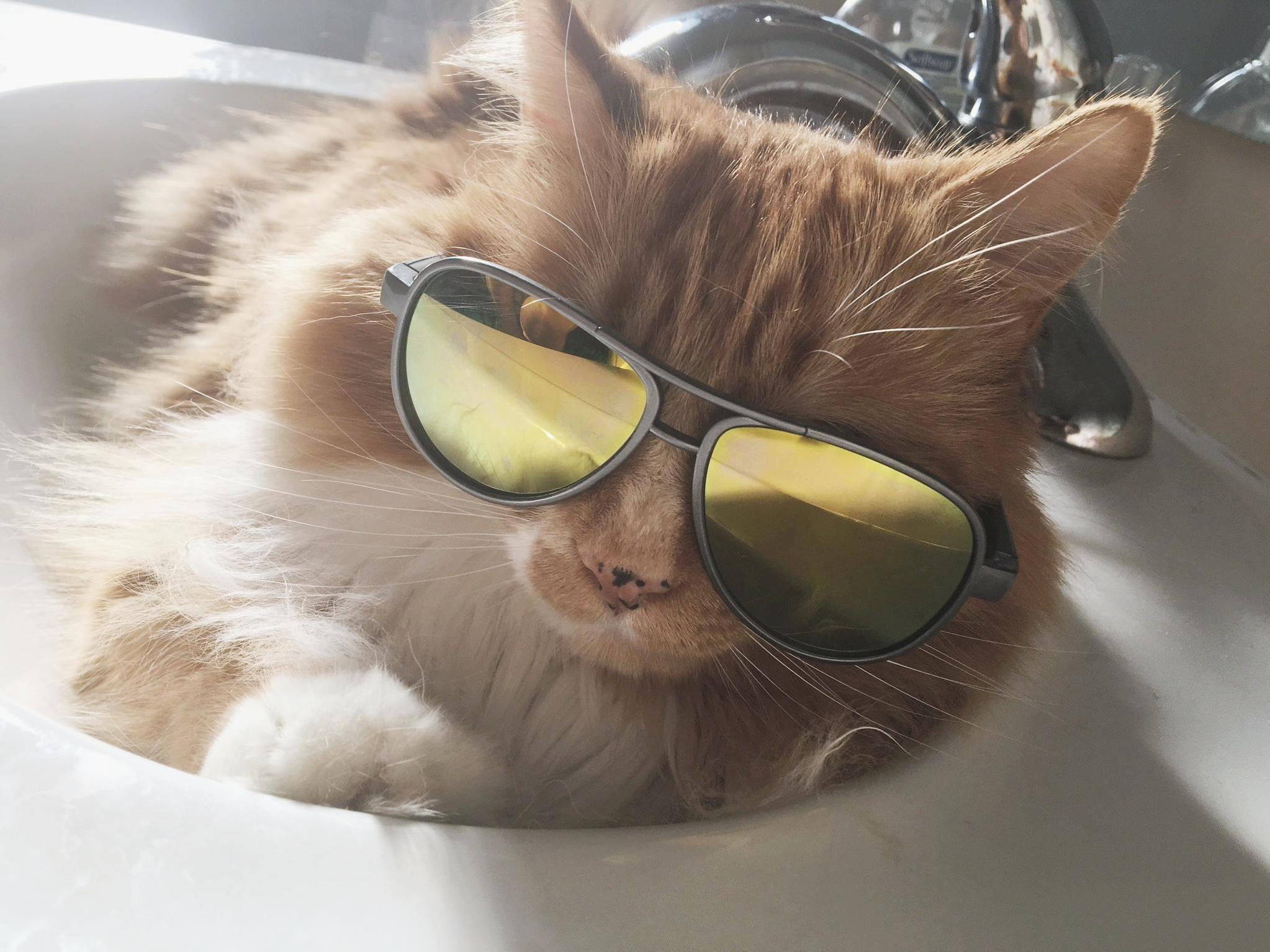 Coolest cat around 