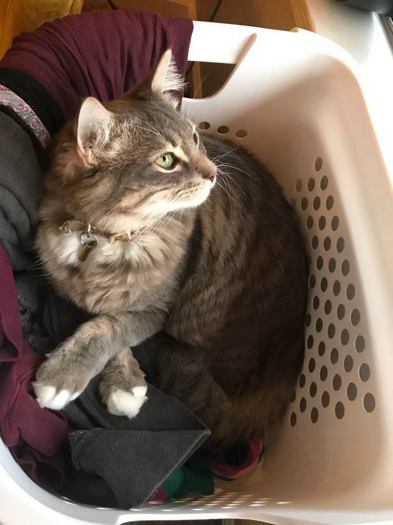 Crossed paws in the laundry basket
