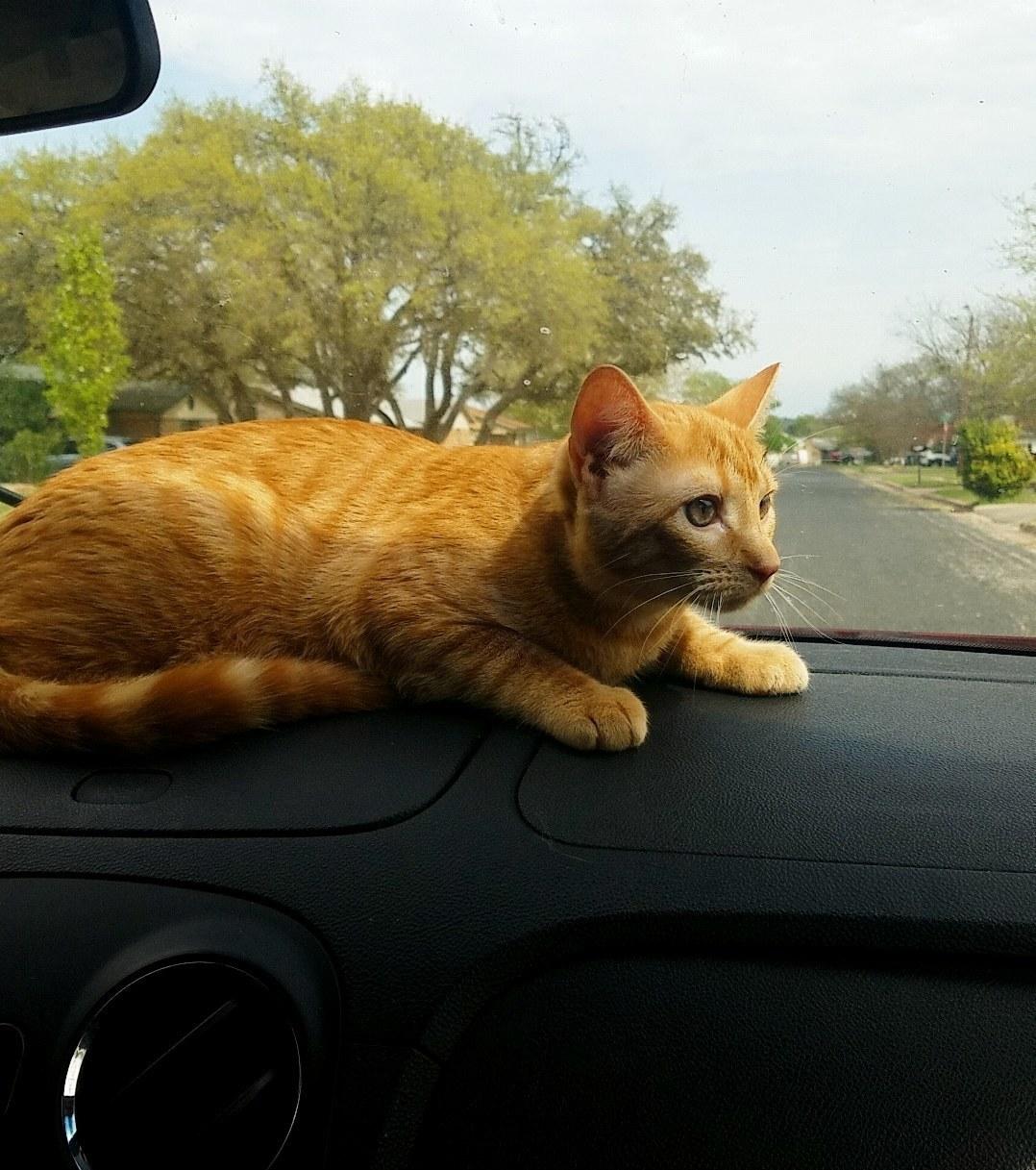 Dewey enjoying his ride around the block