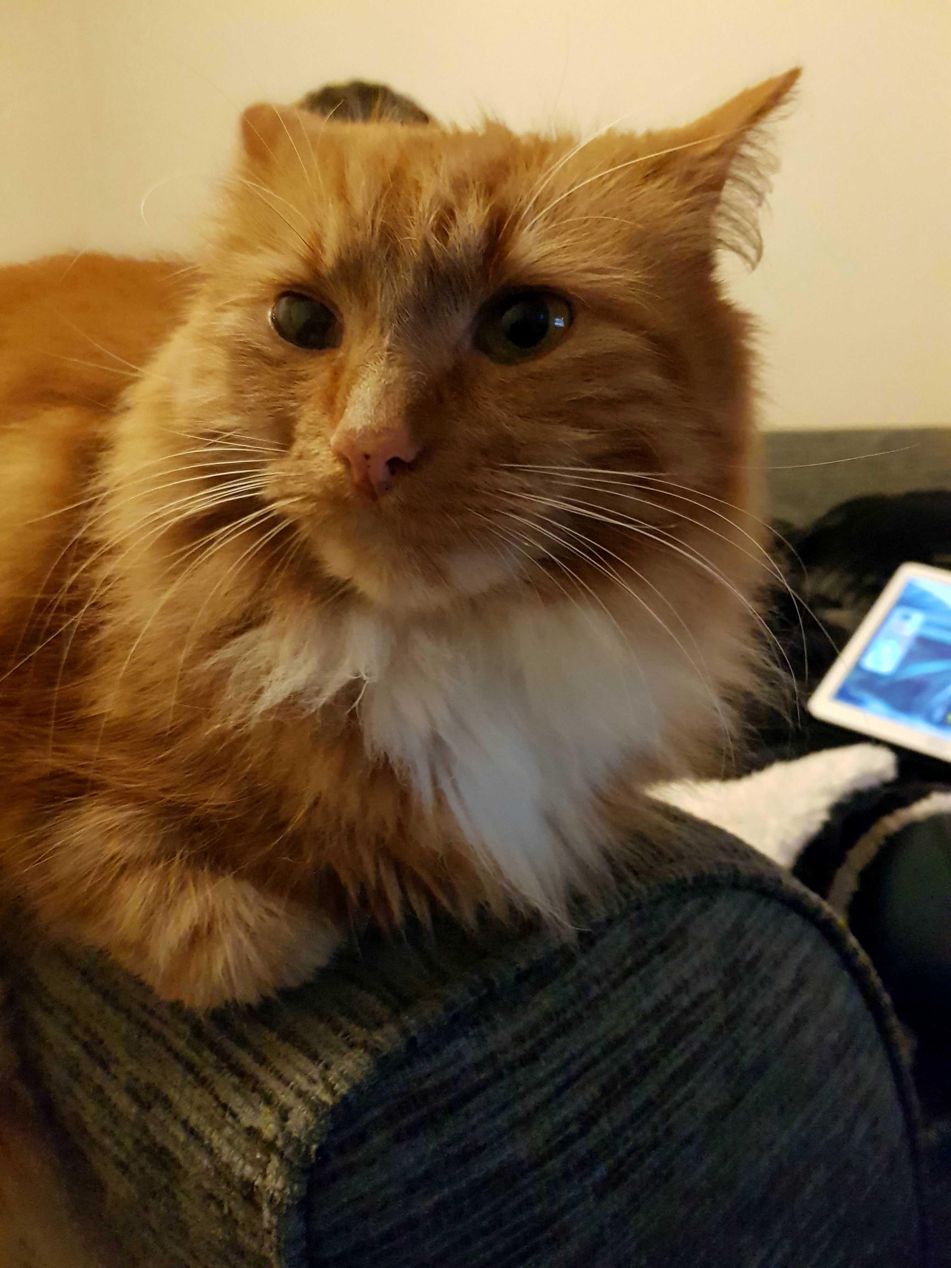 Faaaatttttt cat