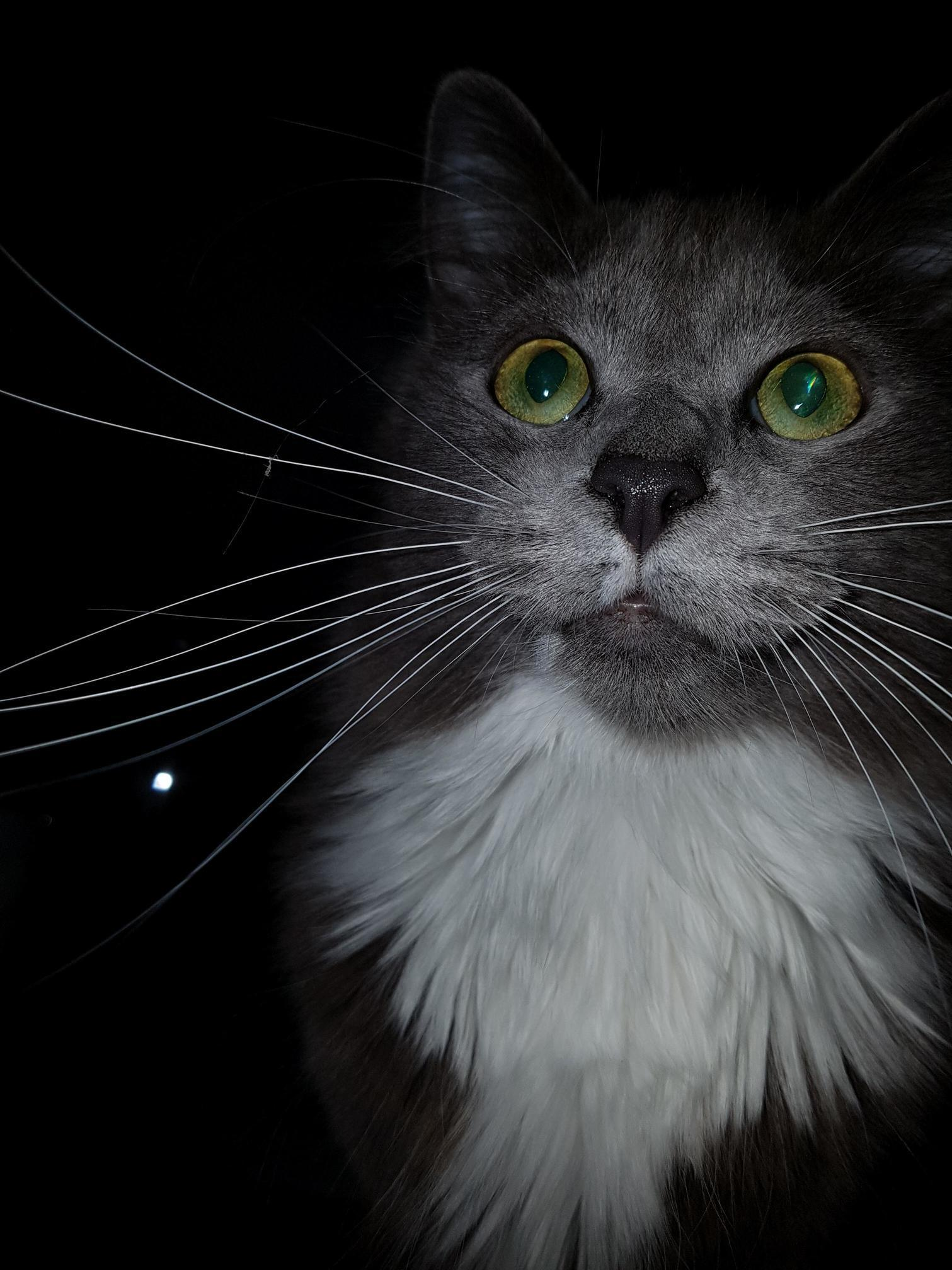 Forgot the flash was on and stunned him 