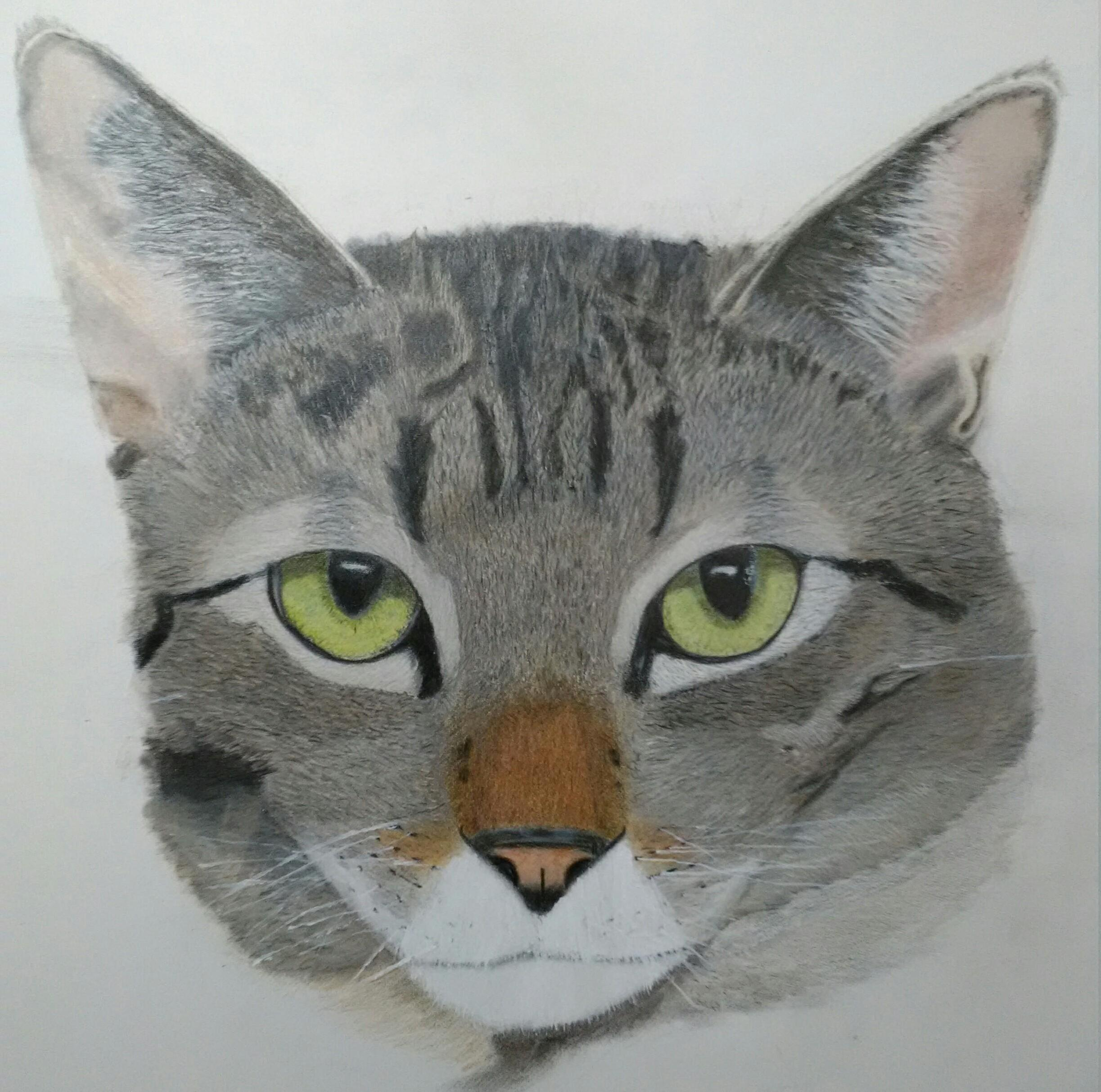 Gracie is finished…first drawing ever. tips or critiques welcome.