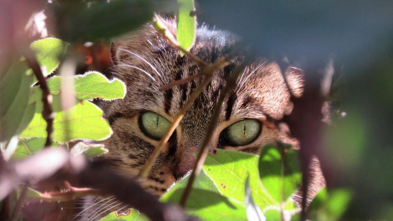 Happy street kitten (taken in madrid, spain)