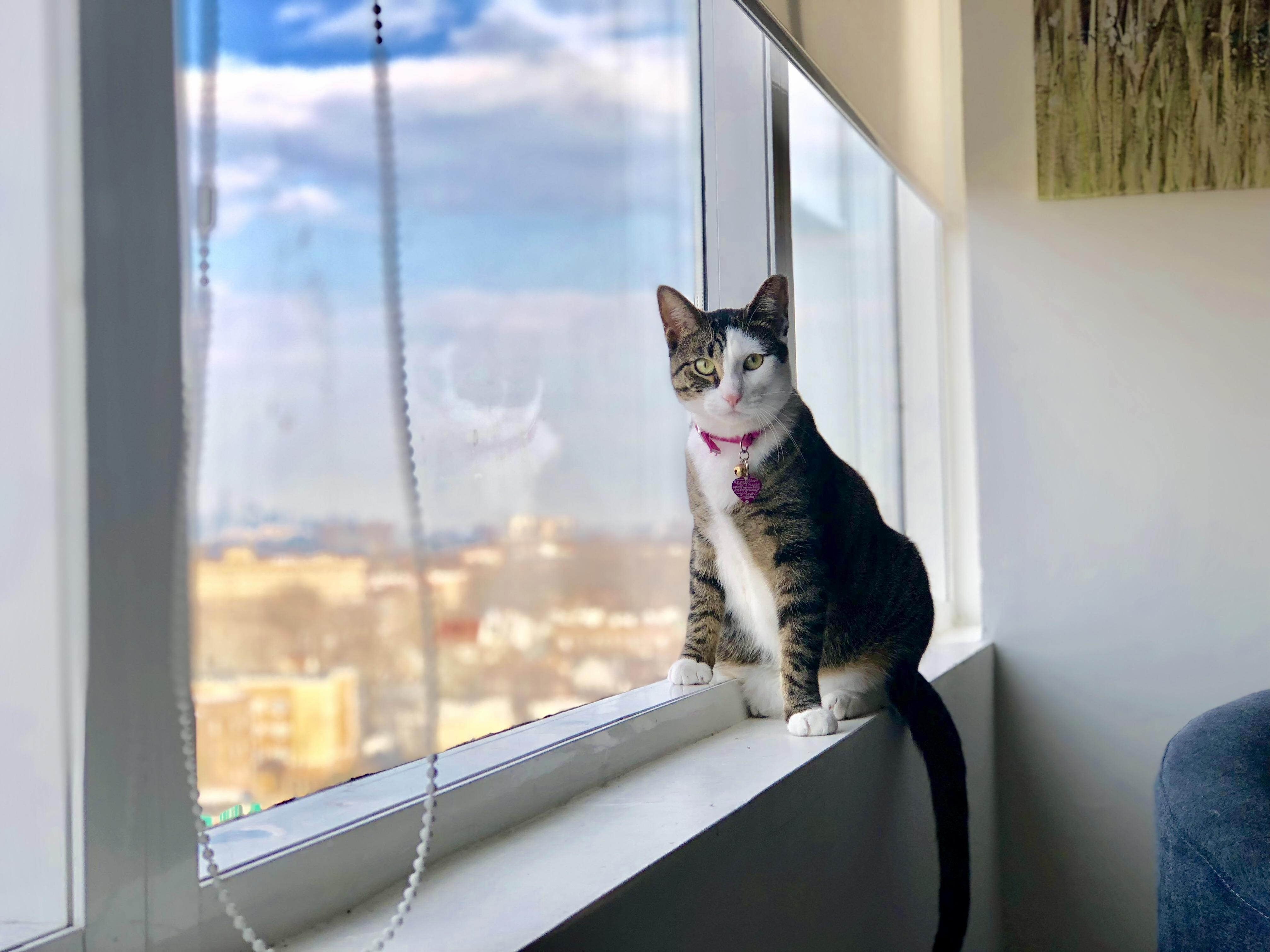 I should really buy her a tower.