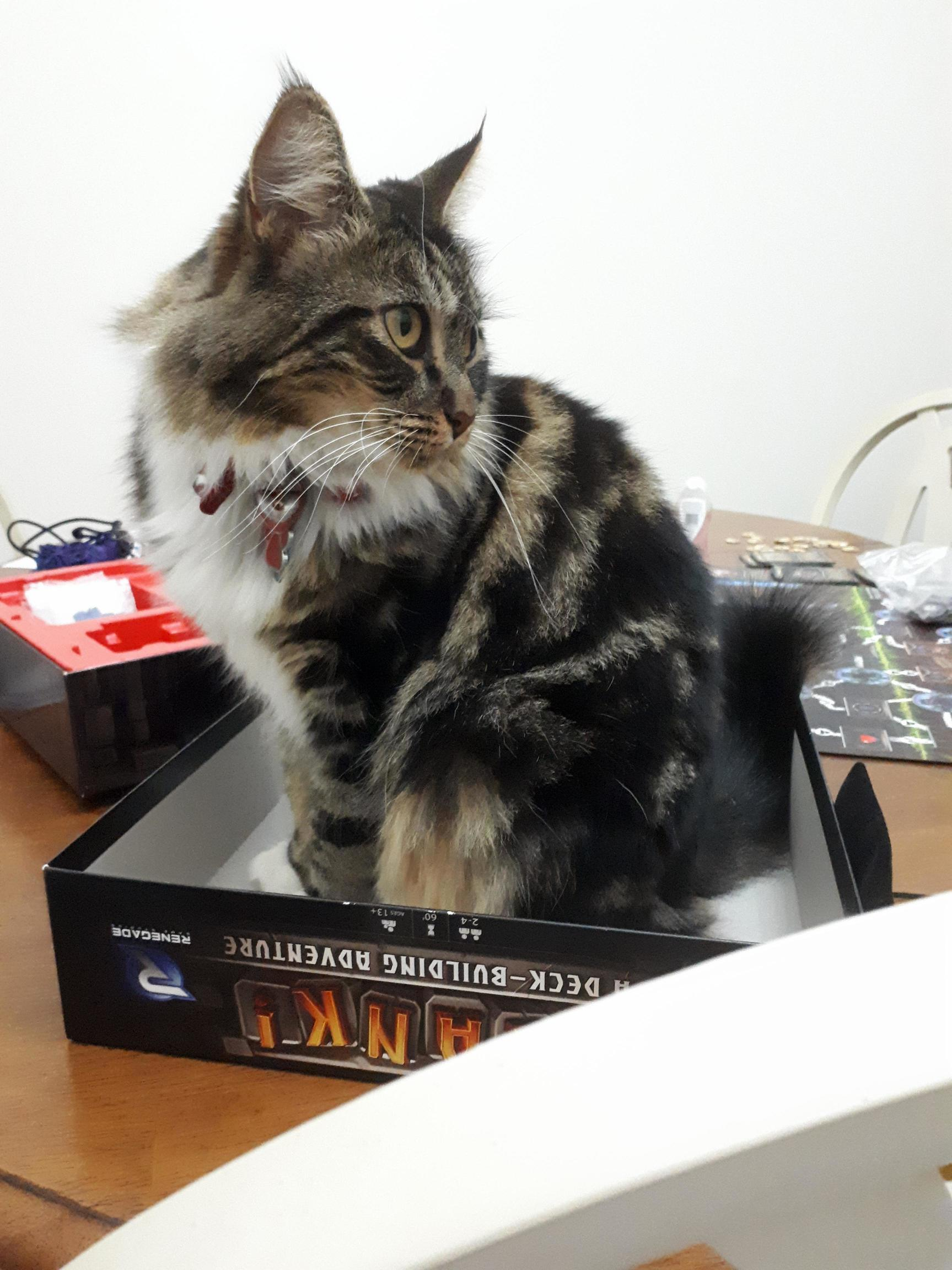 Im borrowing clank from a relative. it came with a cat trap.
