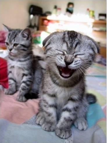 Laughing kitten )