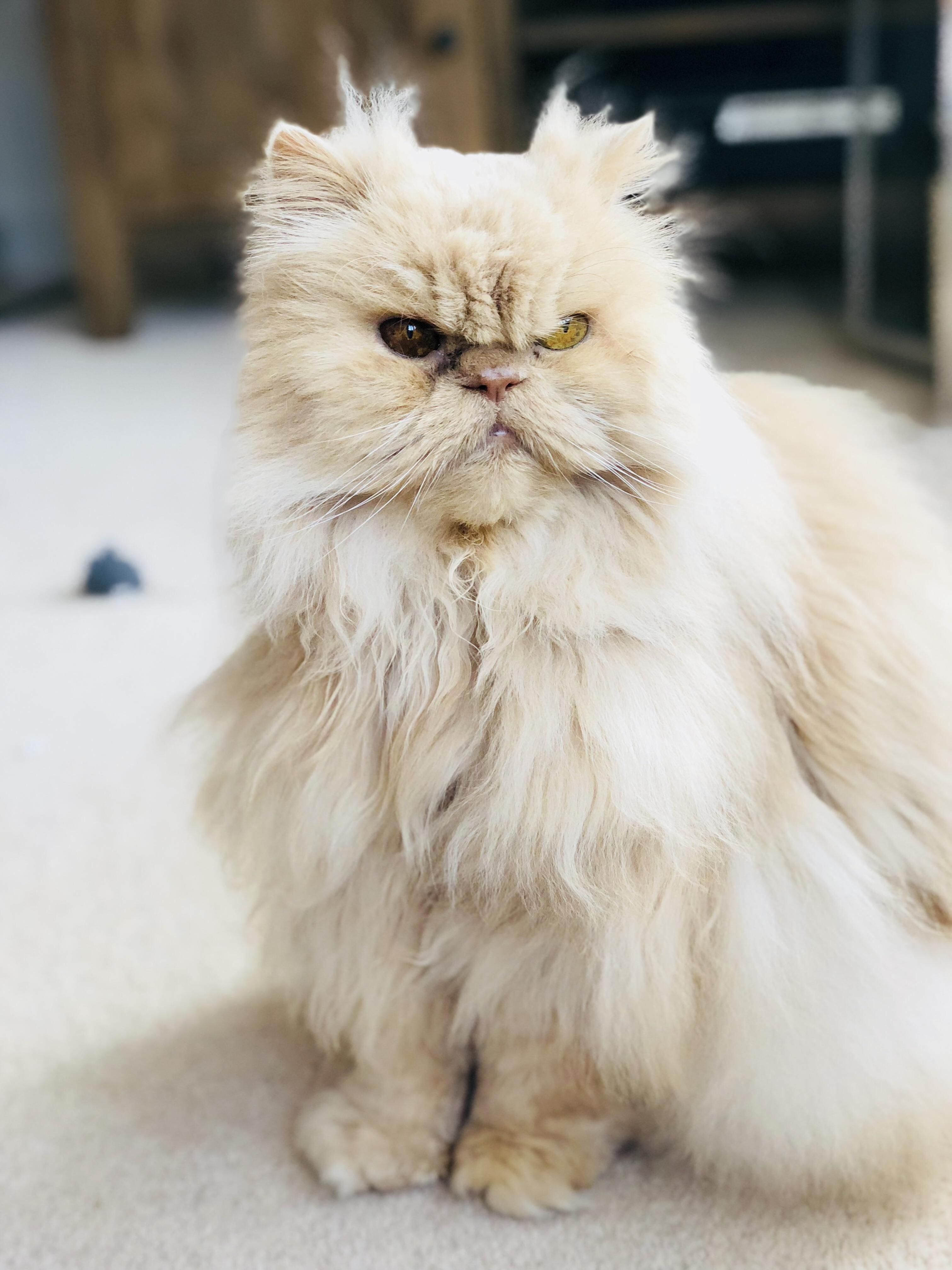 Meet mr o. old, grumpy but very lovely.