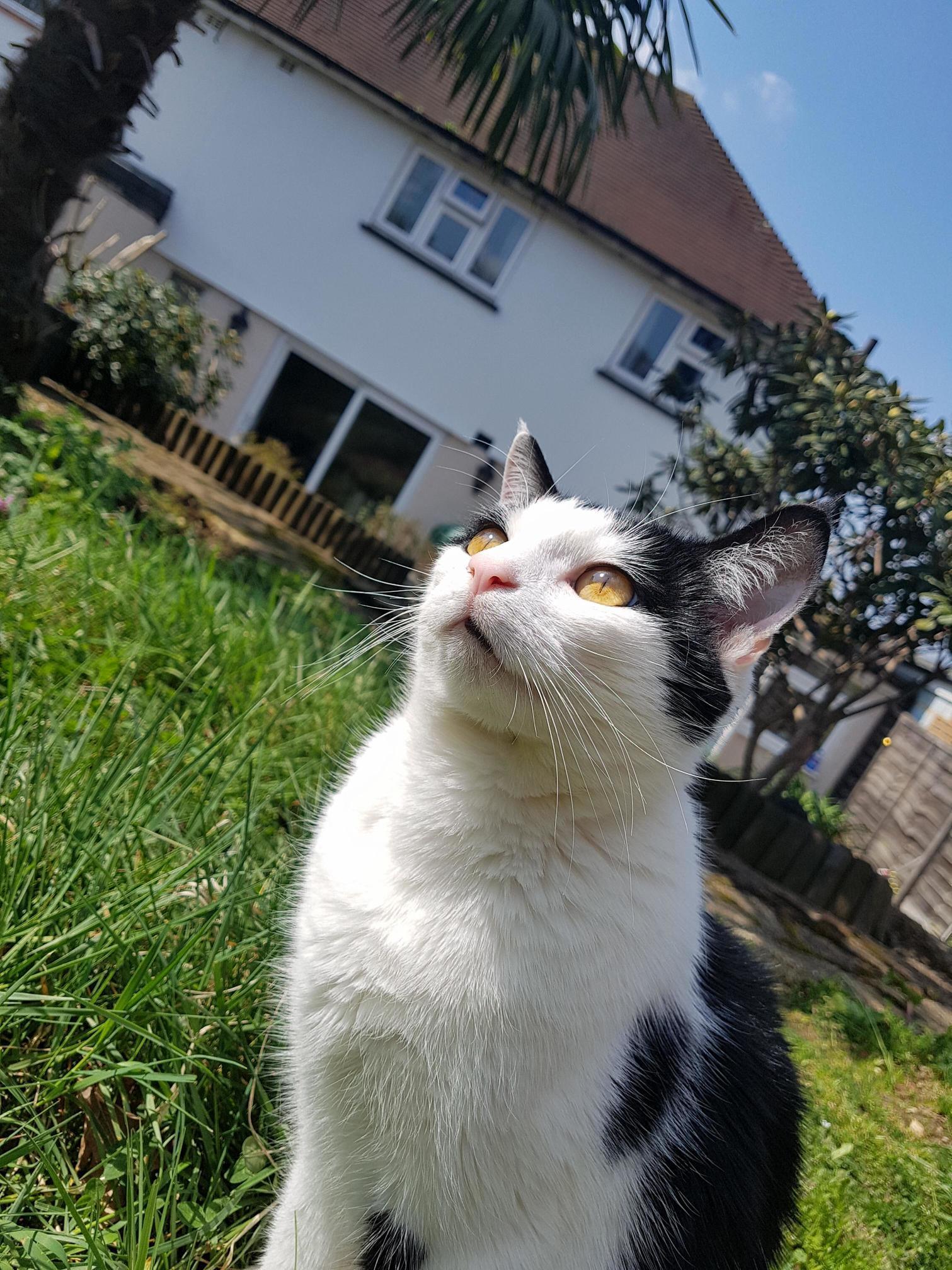 Mogwai looks adorable in the sun