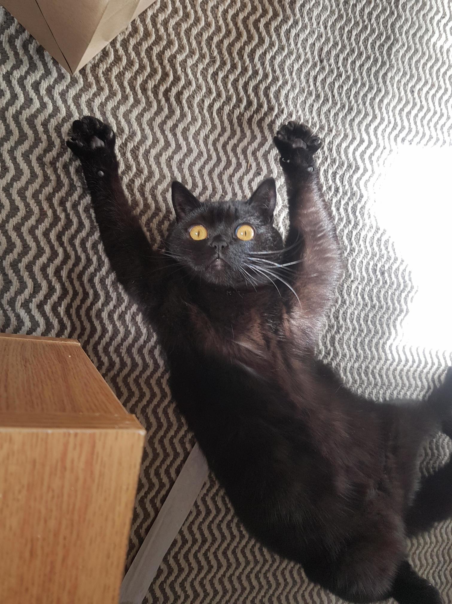 My cat being weird
