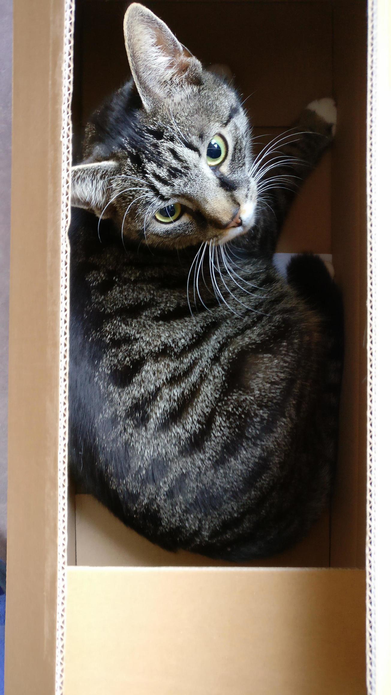 My cat in a box!