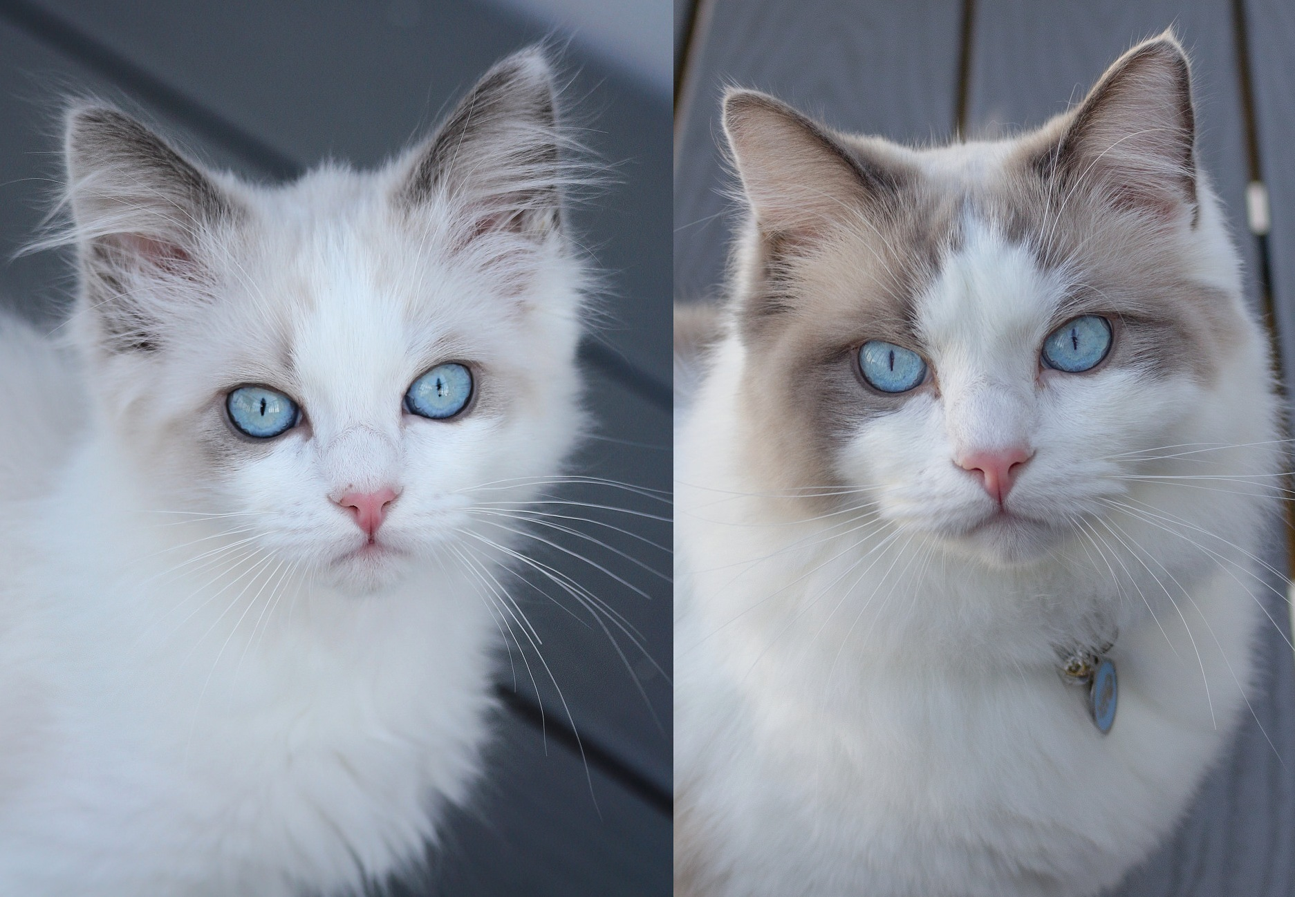 My cat sam, age 13 weeks vs 13 months 