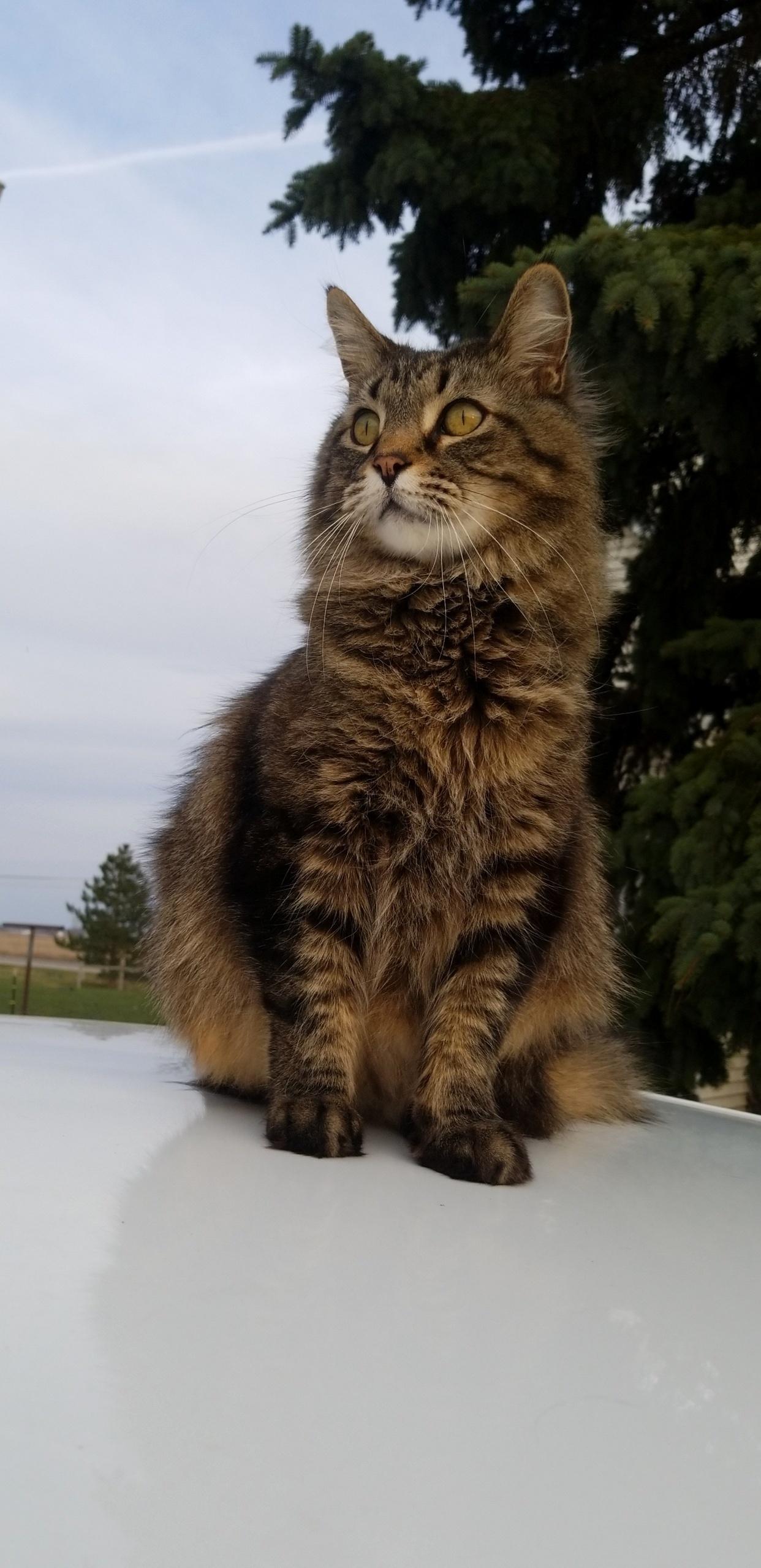 Overlooking his kingdom.